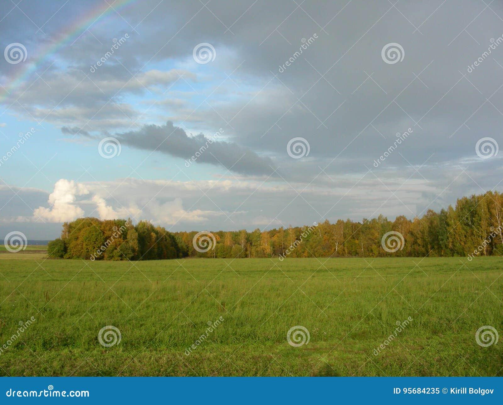 Césped con la hierba verde y árboles en el fondo