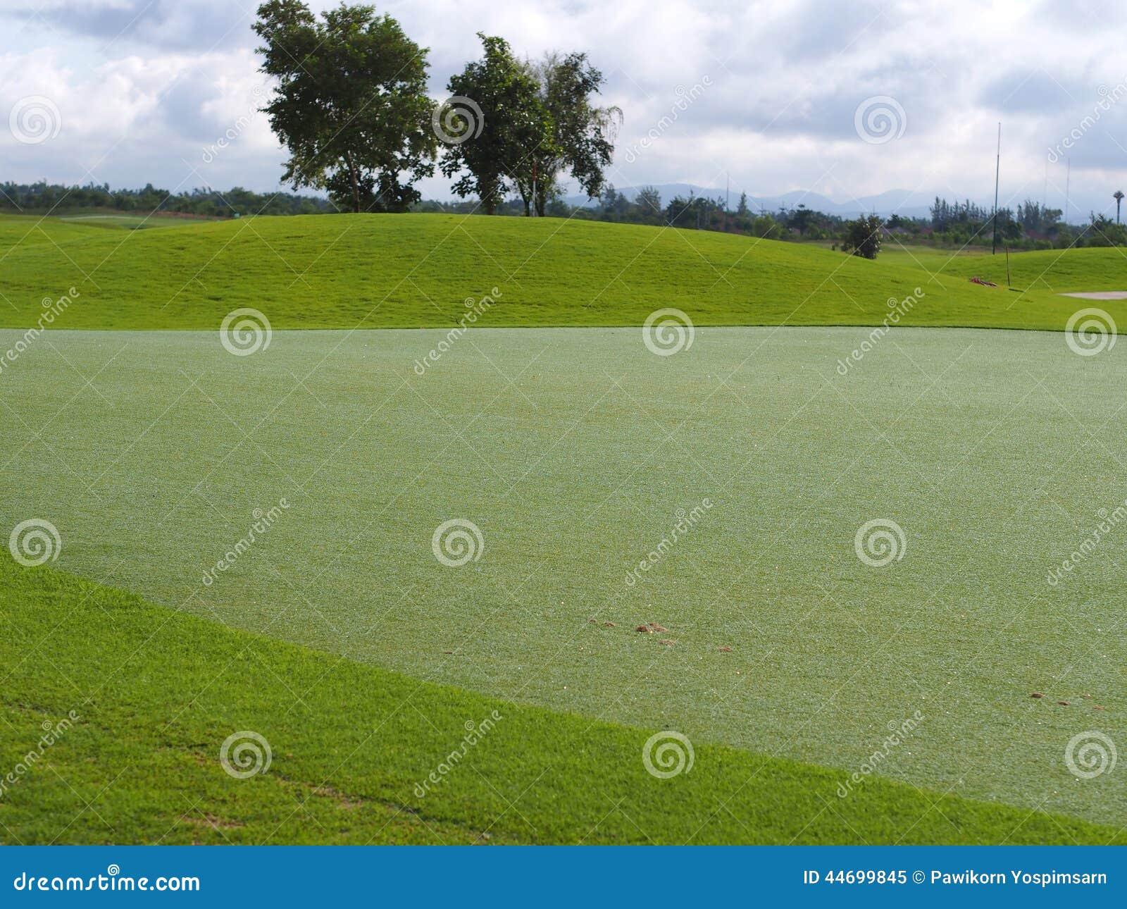 Césped del putting green en campo de golf