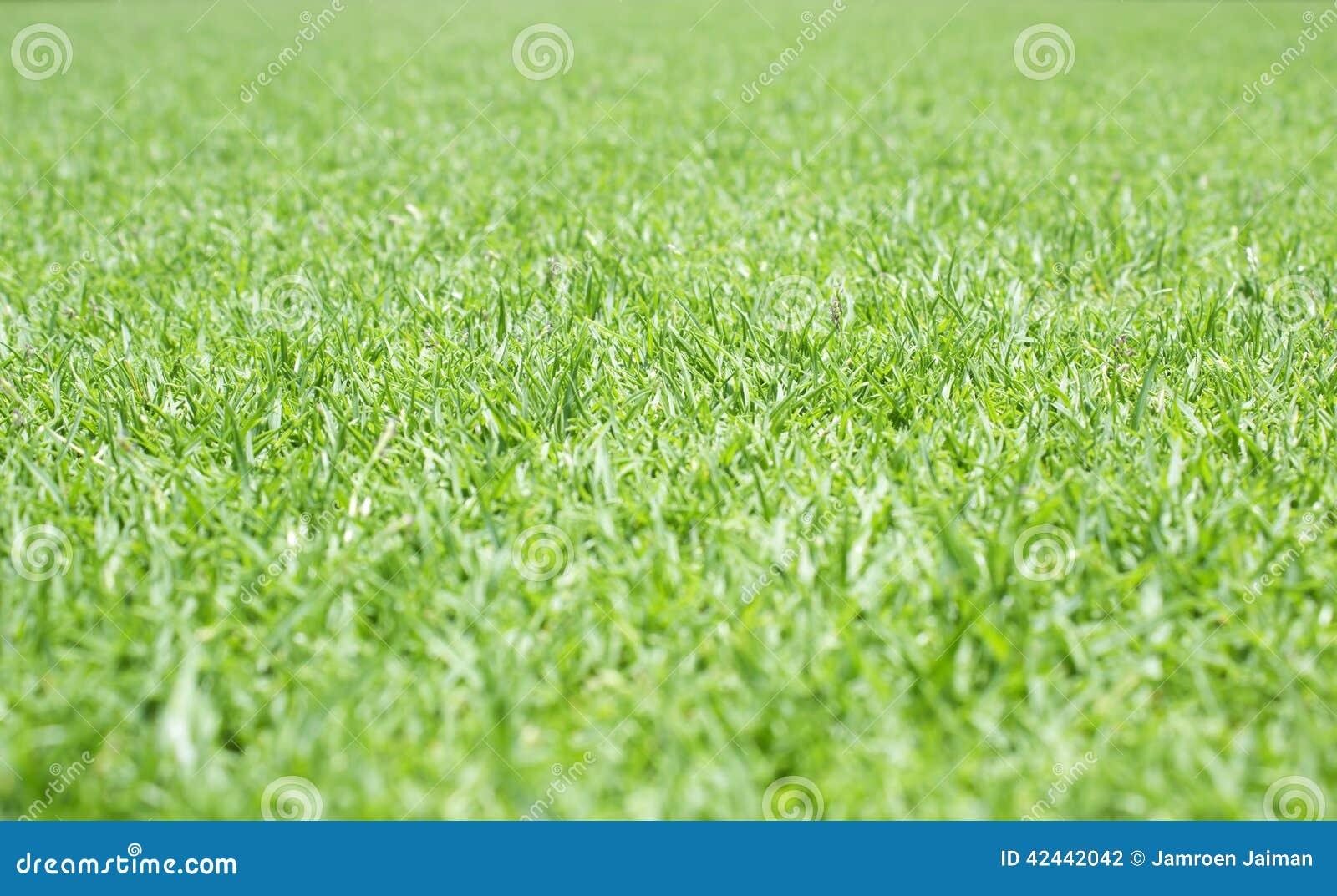 Césped verde para el fondo