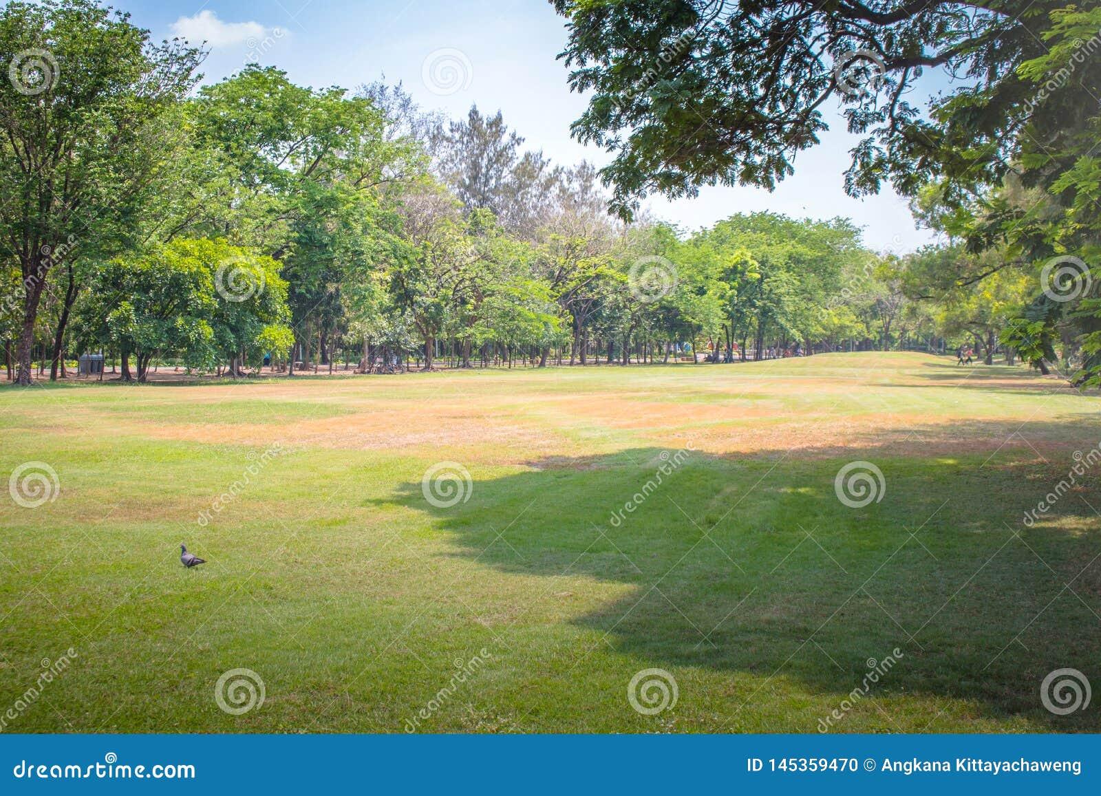 Césped y árboles verdes con el cielo azul en parque público