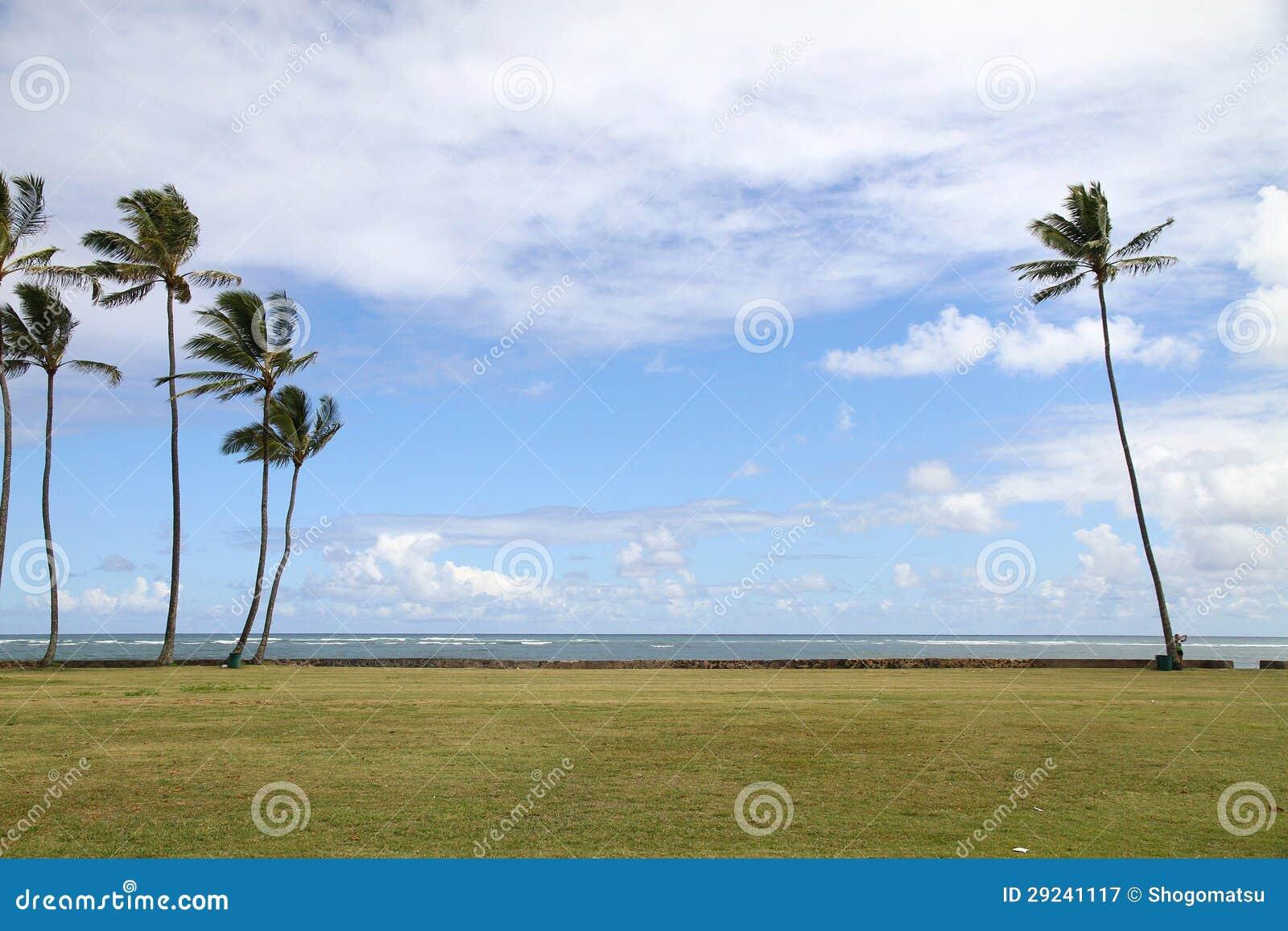 Download Céu azul com palmeira imagem de stock. Imagem de árvore - 29241117
