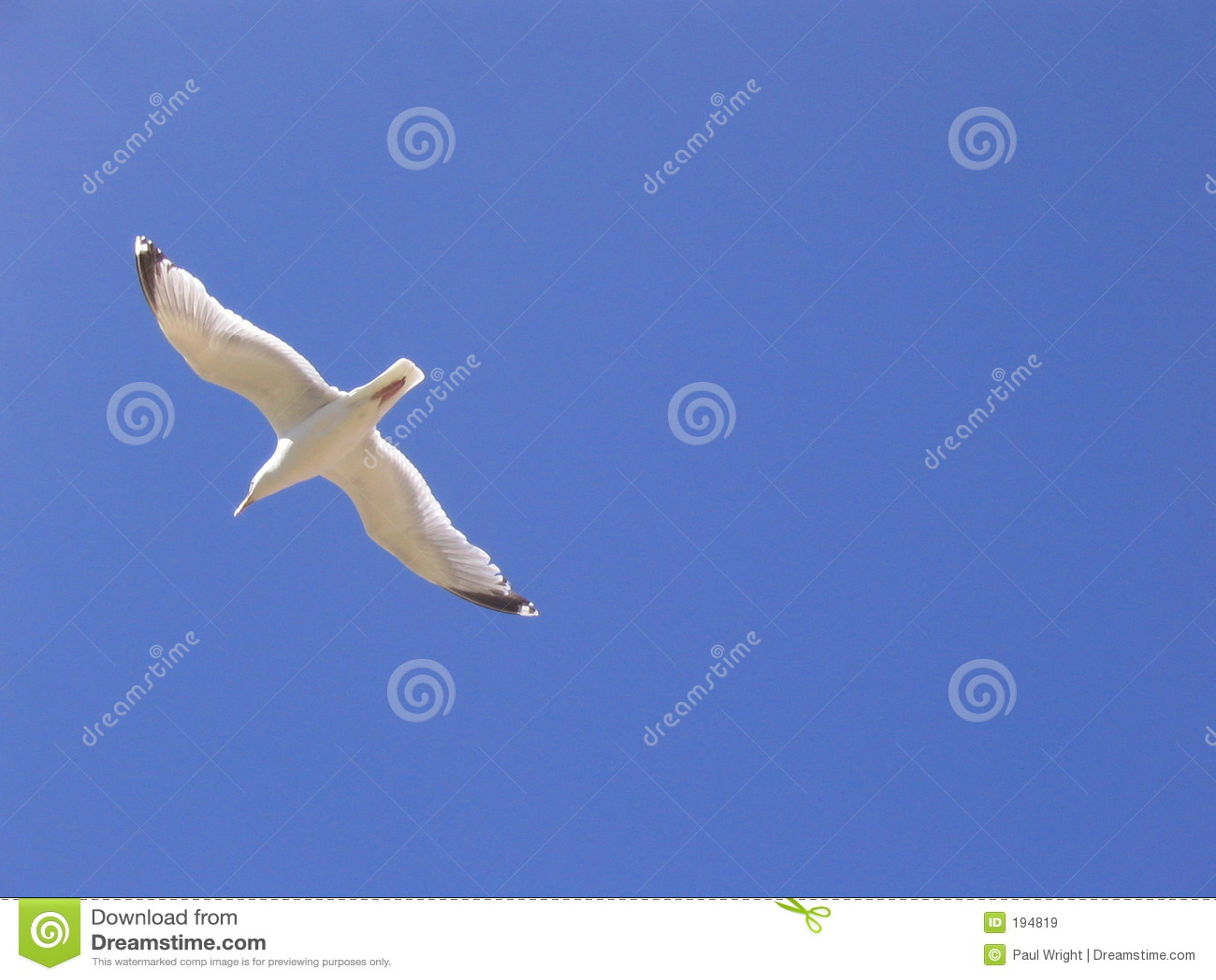 Céu azul da gaivota