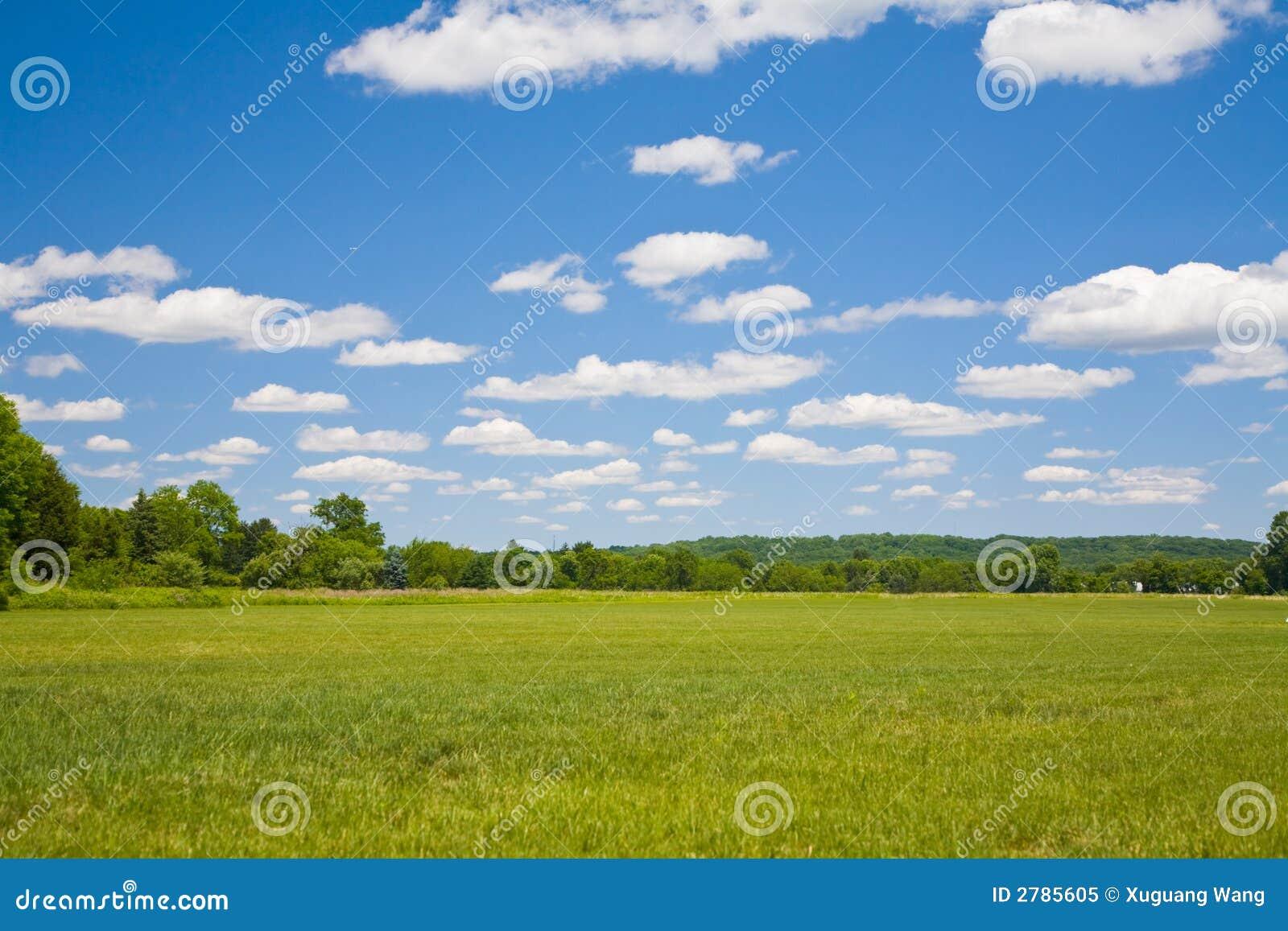 Céu azul e grama verde
