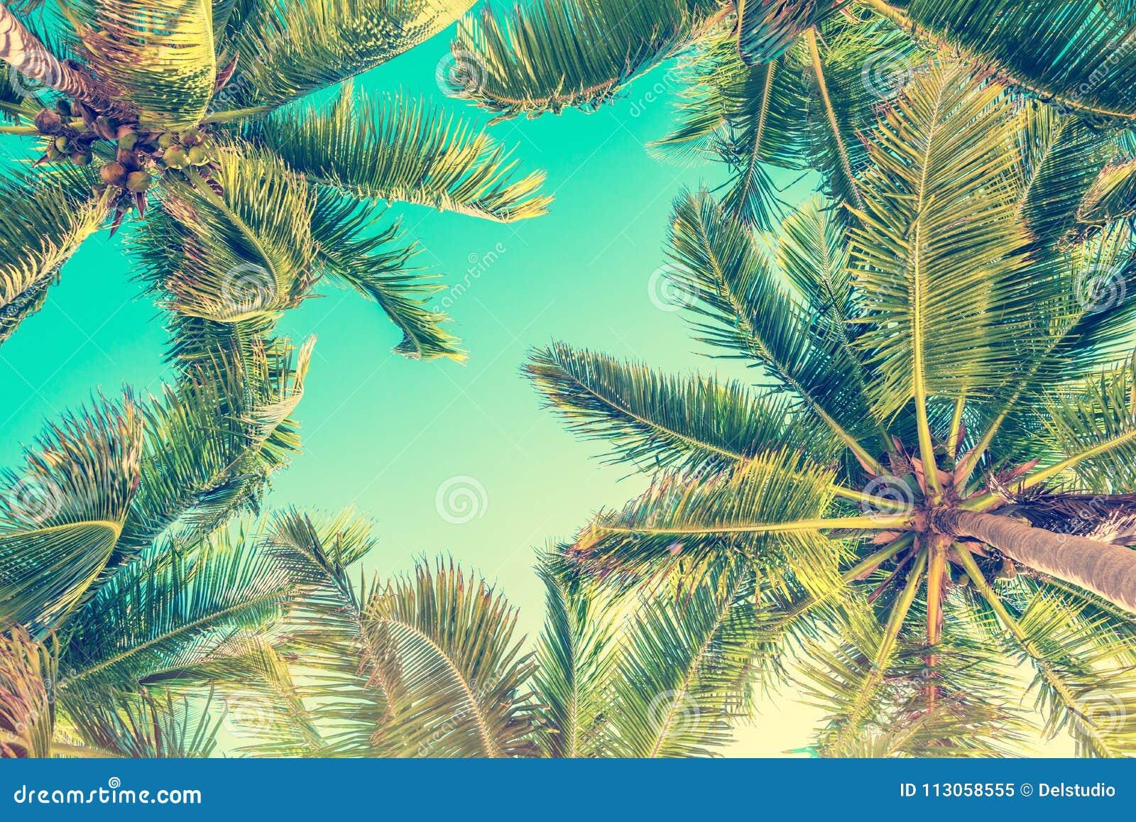 Céu azul e opinião de palmeiras de baixo de, fundo do verão do vintage