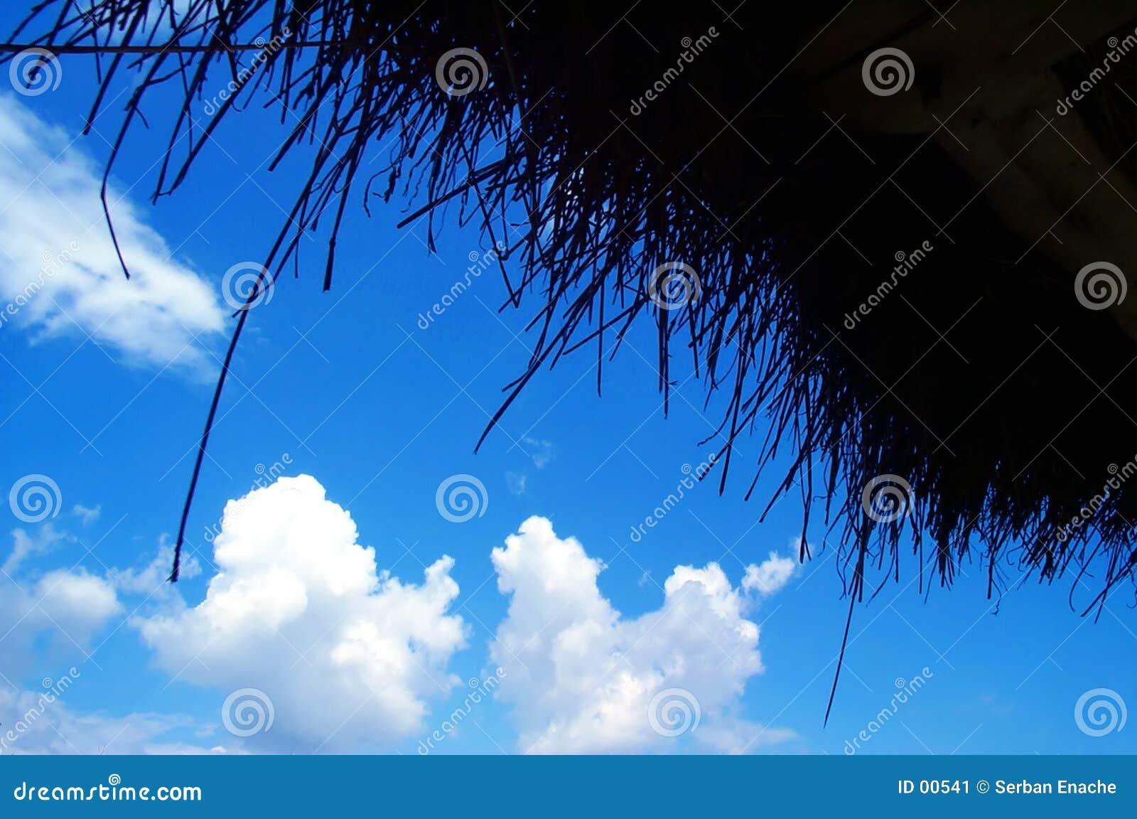 Céu azul feito das palhas