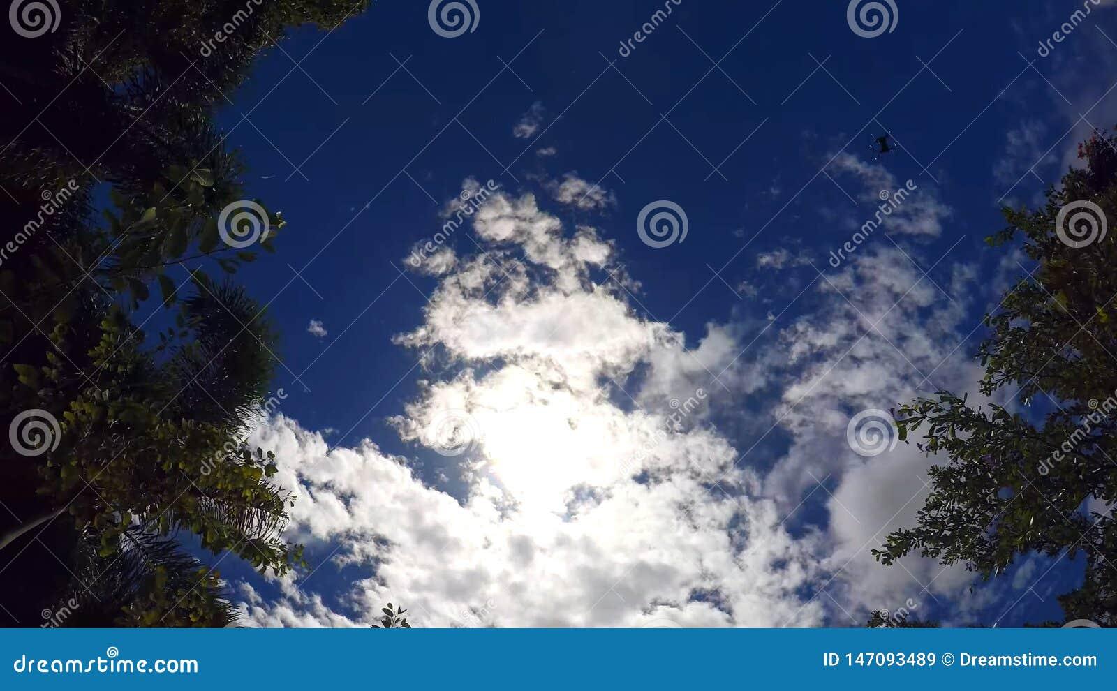 Céu brilhante, tropical, no quadro do zangão