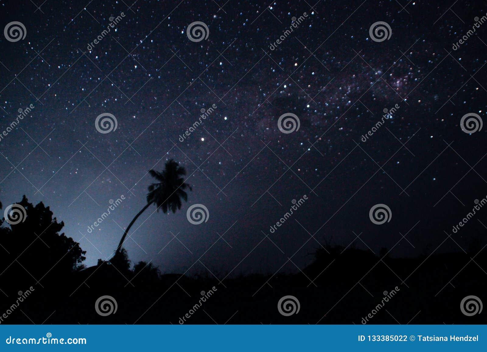 Céu estrelado da noite com muitas estrelas e os esboços das palmeiras