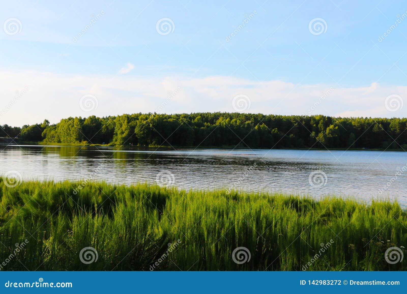 Céu nebuloso azul da paisagem Belorussian e campo de trigo verde