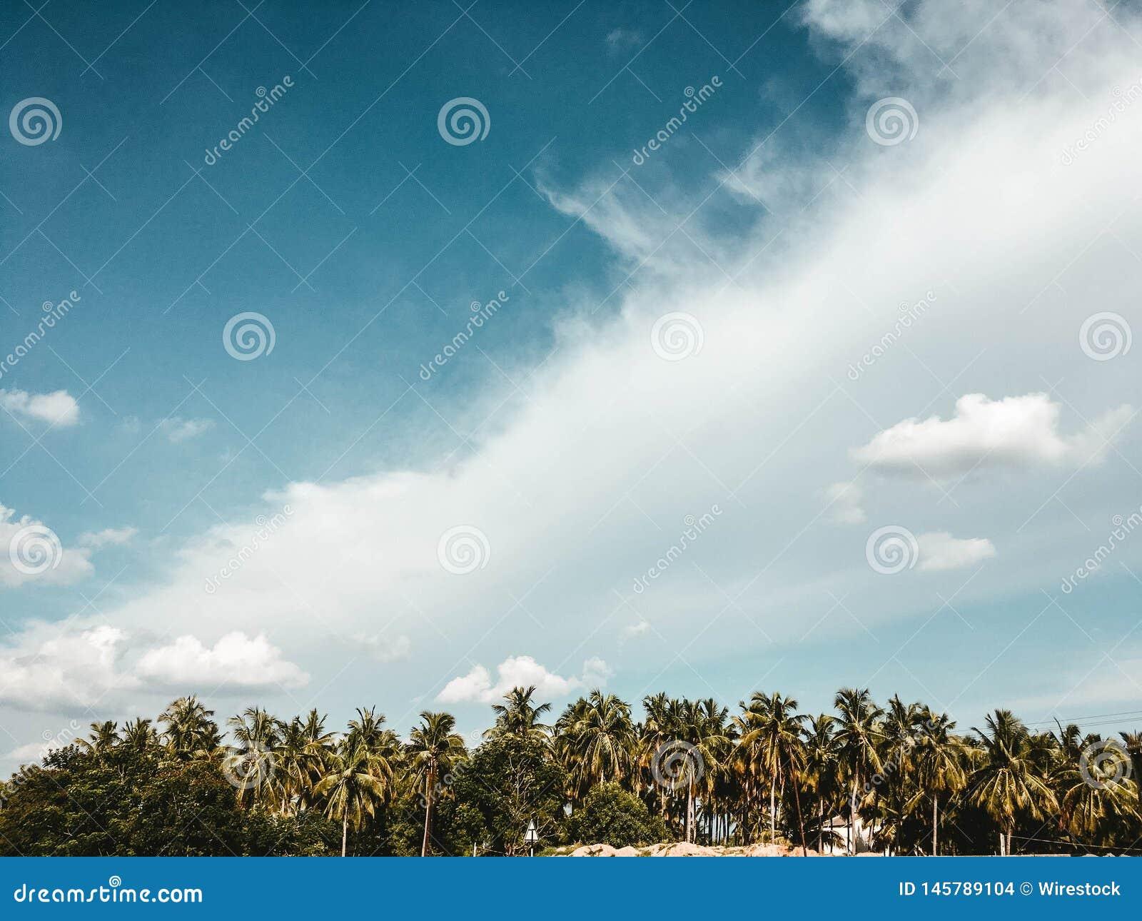 Céu nebuloso bonito com árvores exóticas
