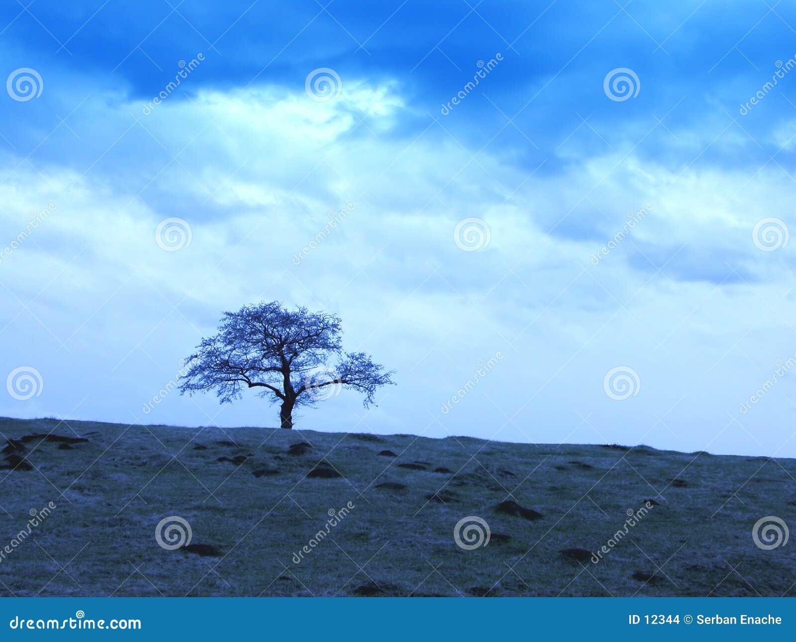 Céus nebulosos e árvore