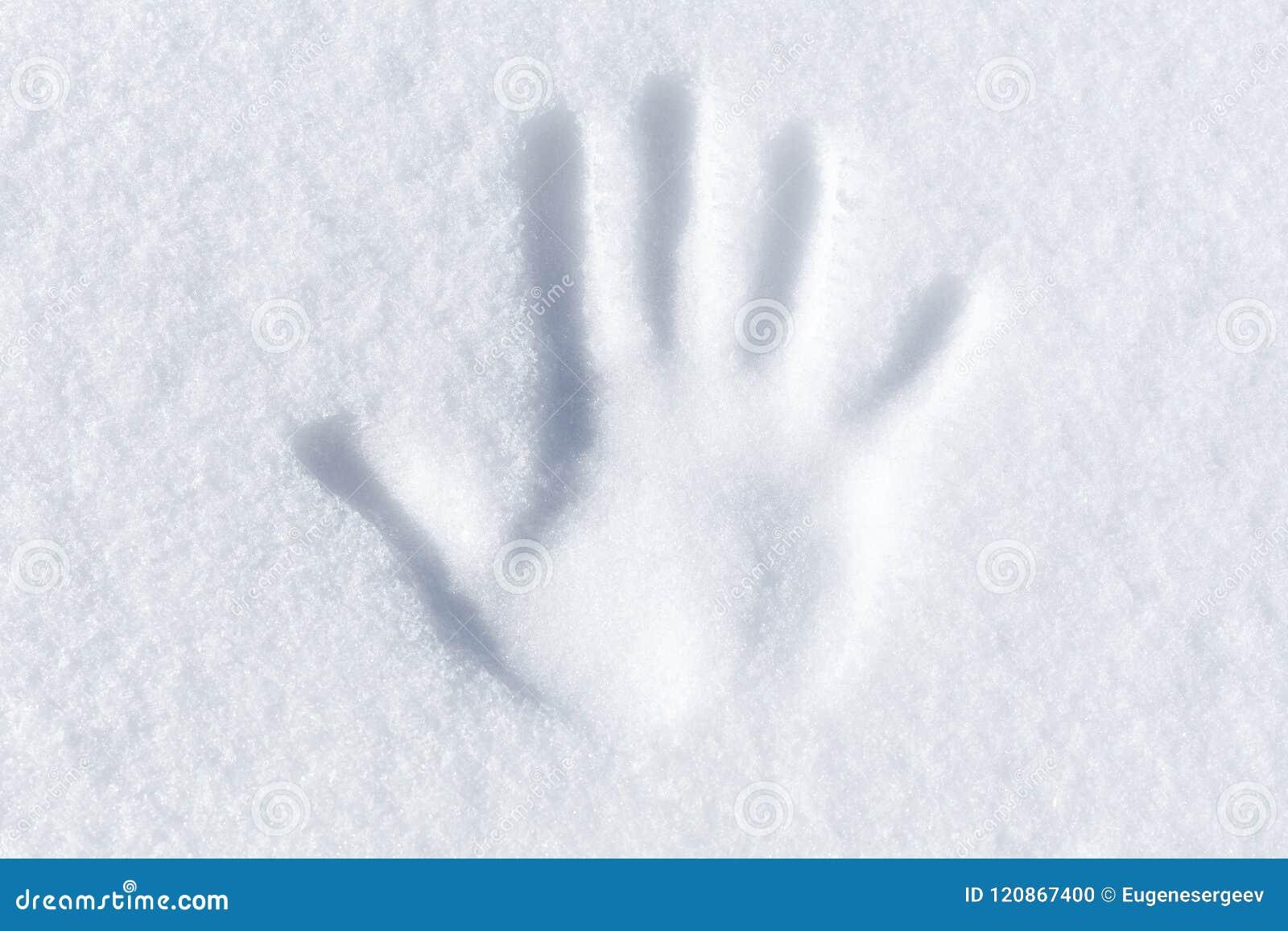 Cópia da palma na neve branca fresca