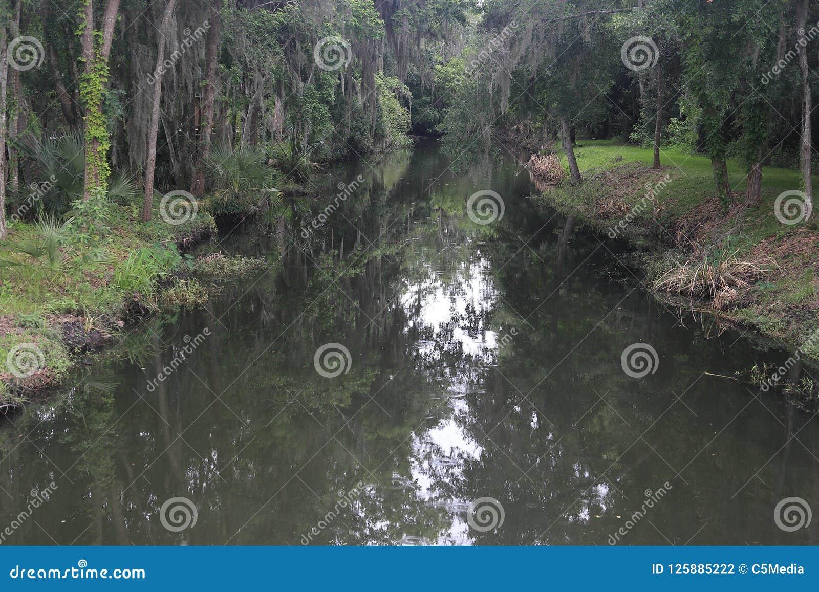 Córrego dos pantanais de Florida durante a chuva ligeira