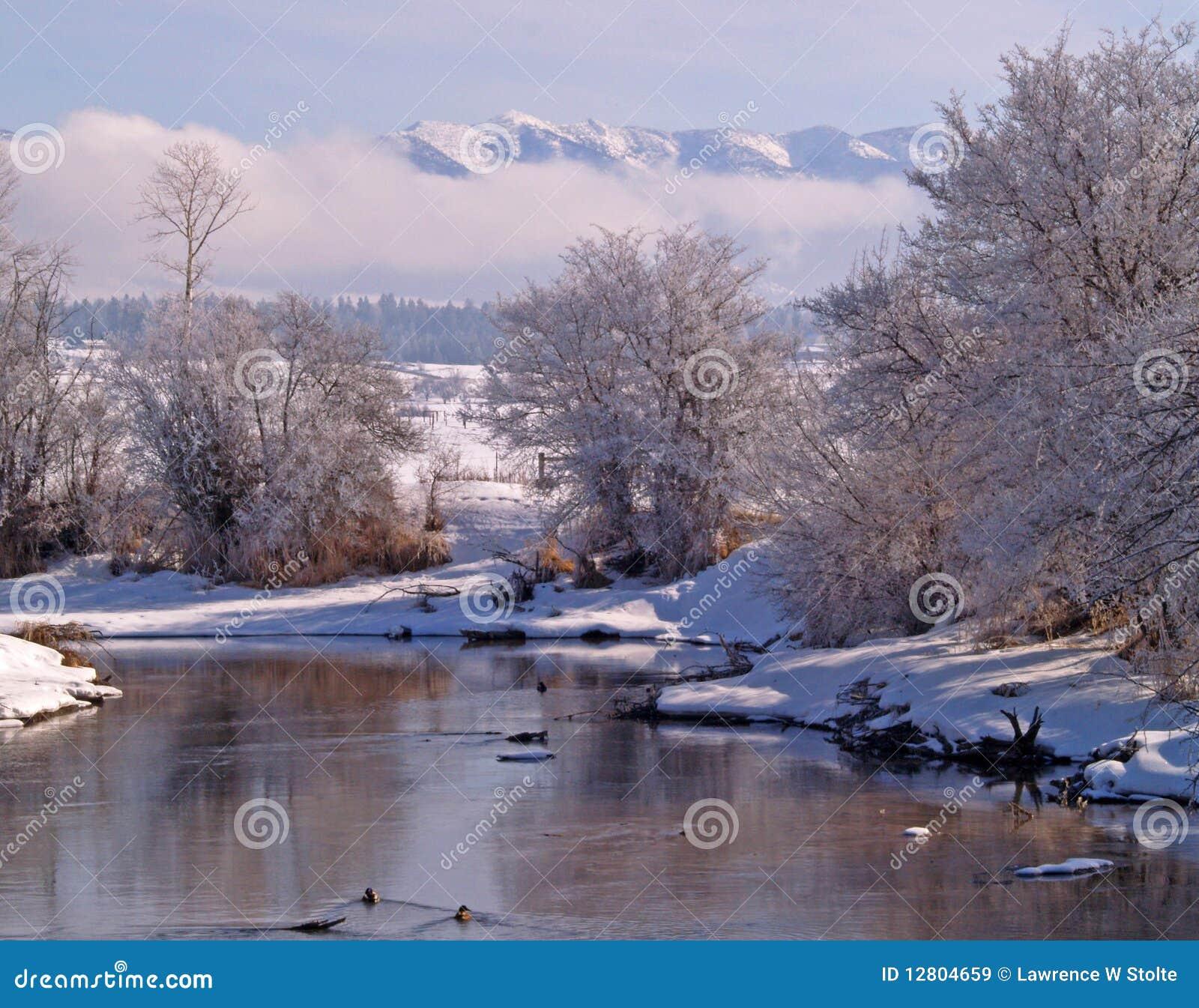 Córrego e patos do inverno