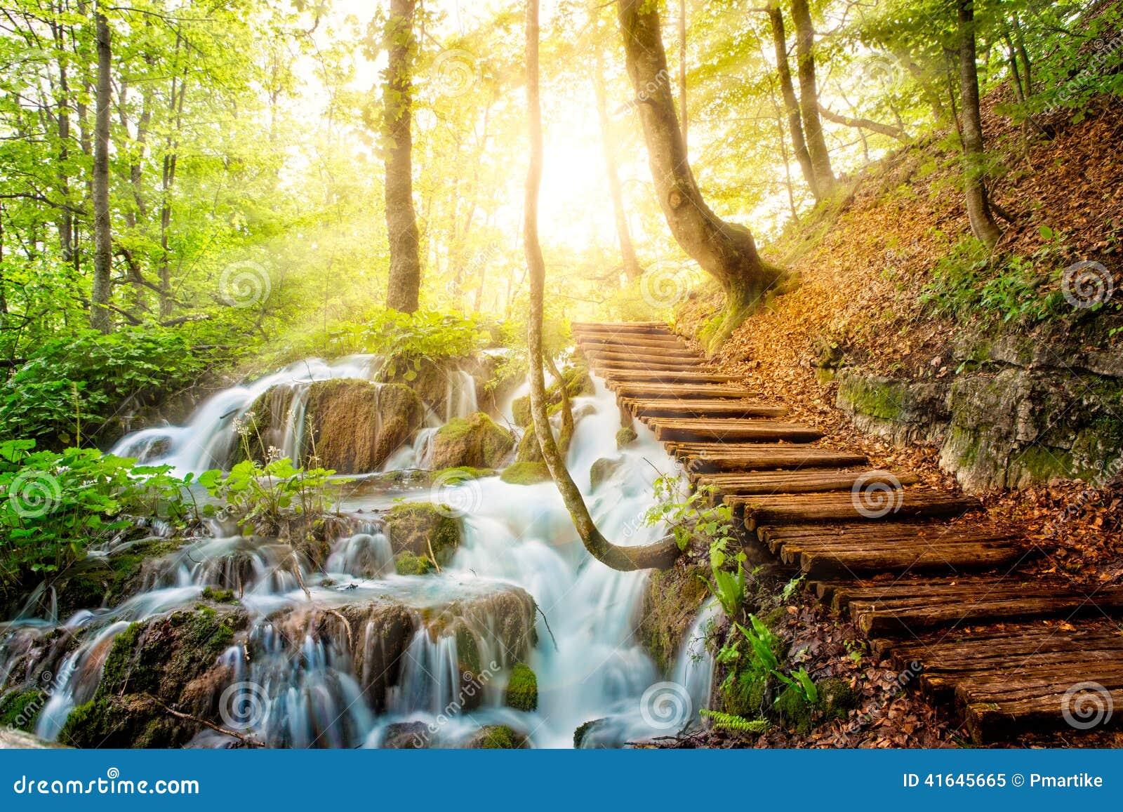 Córrego profundo da floresta com água claro na luz do sol