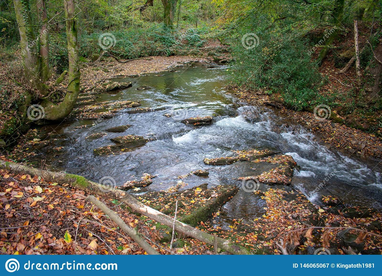 Córrego que corre através de uma floresta de Galês