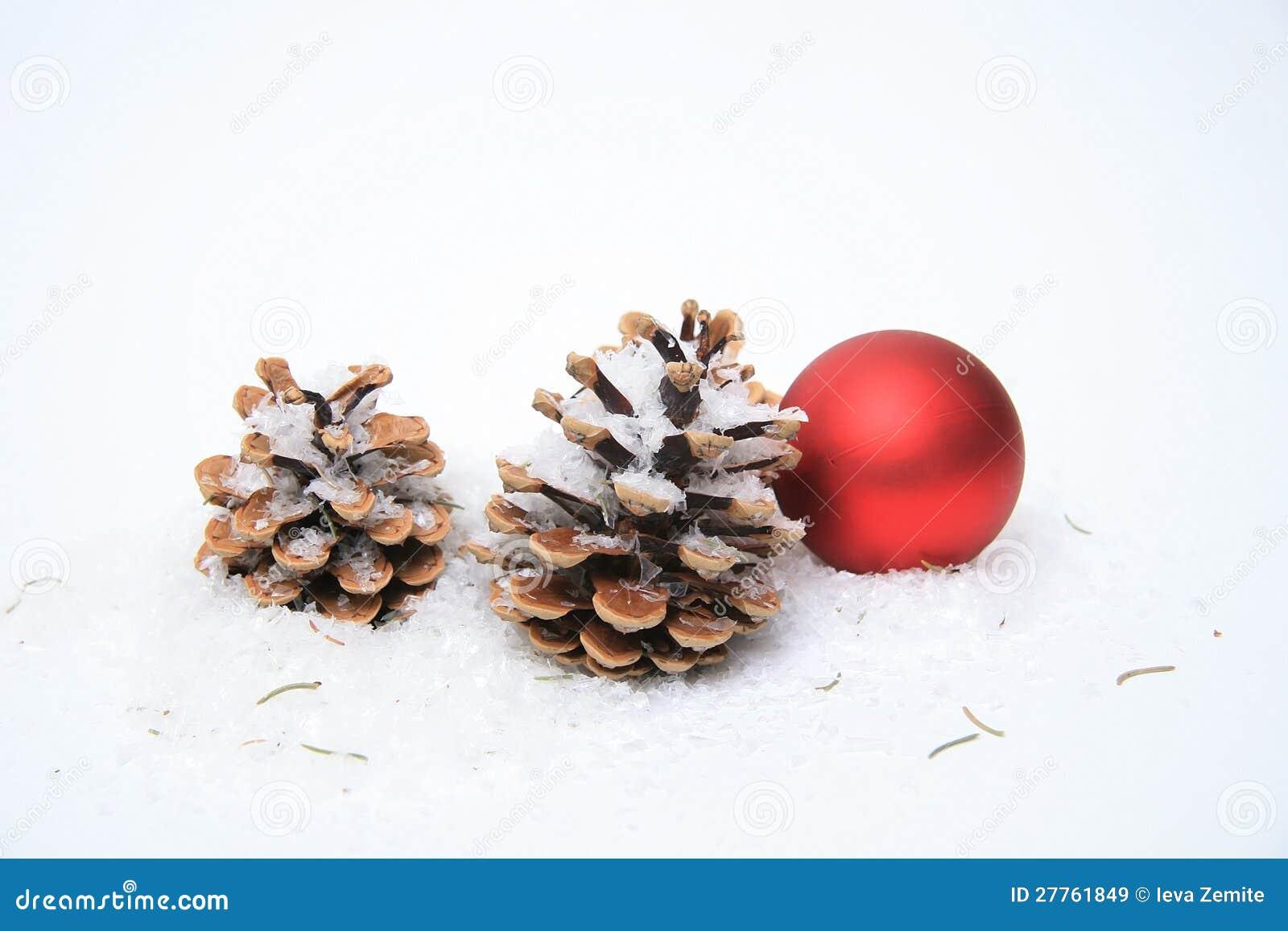 Cône de pin sur la neige