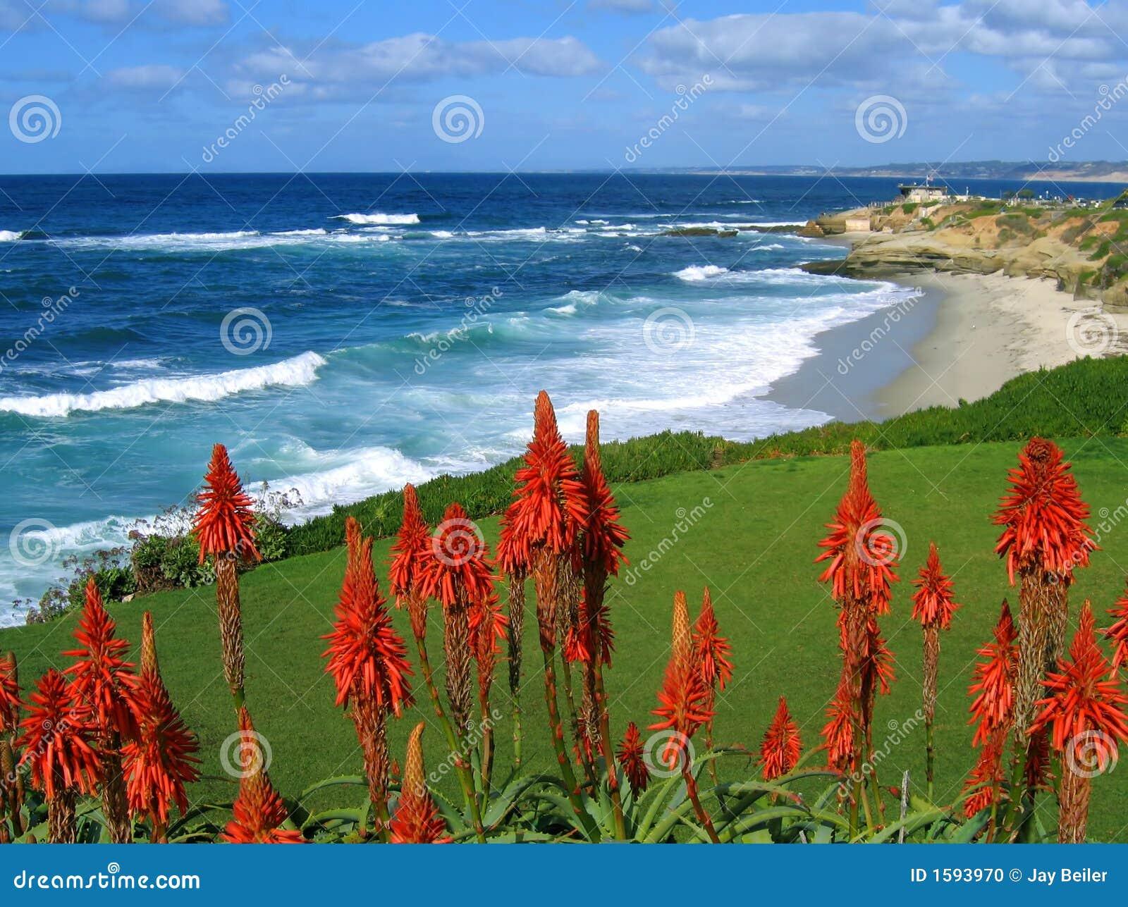 Côte de La Jolla, la Californie, avec les succulents rouges