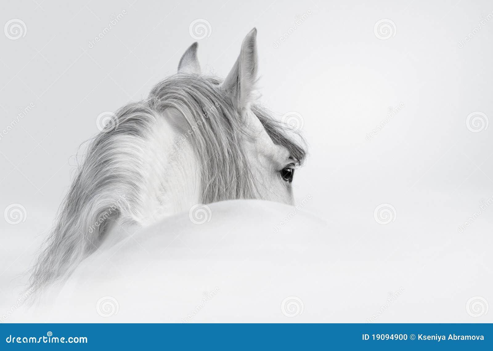 $c-andalusisch paard in een mist