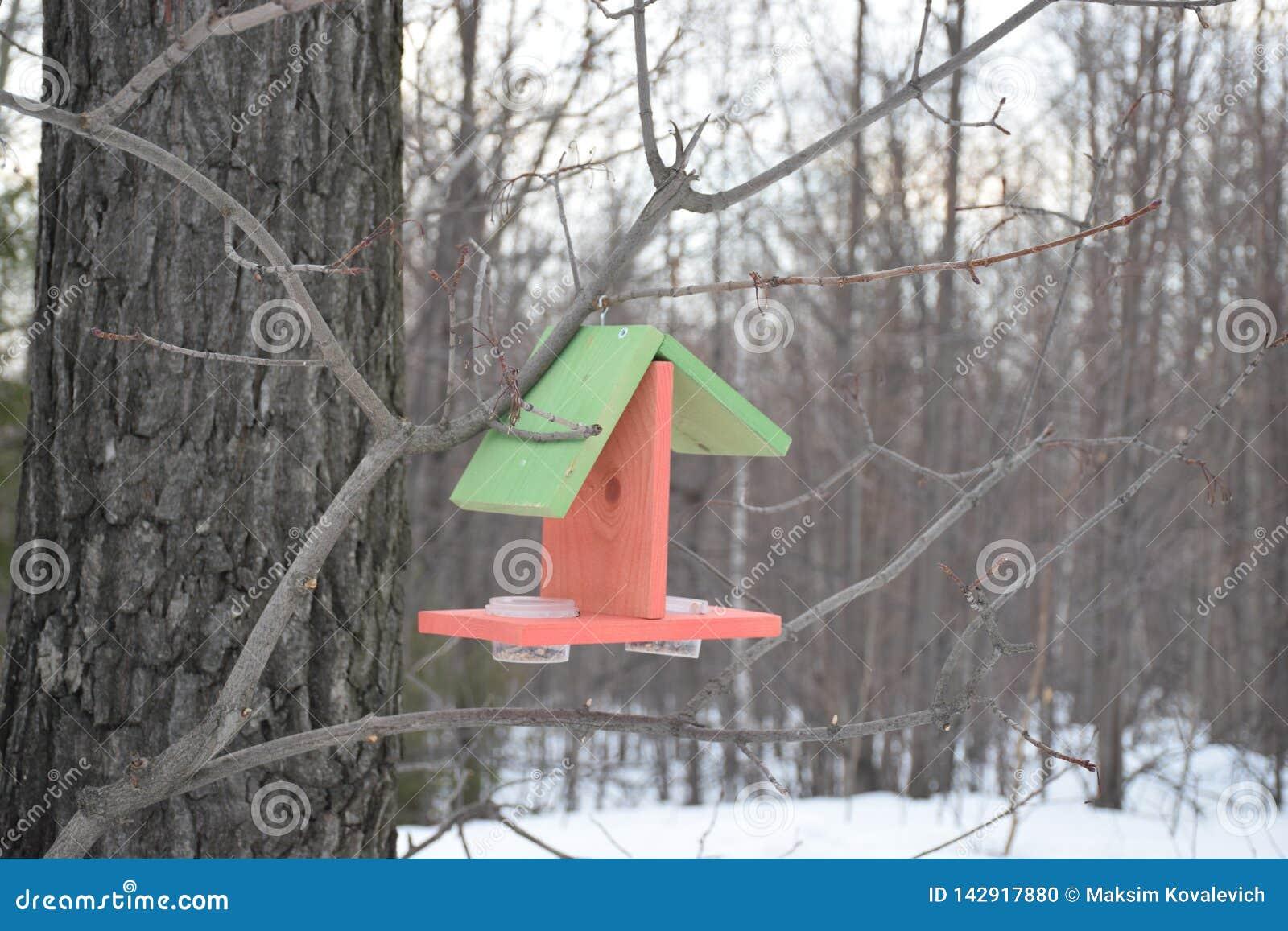 C?ble d alimentation d oiseau dans la for?t
