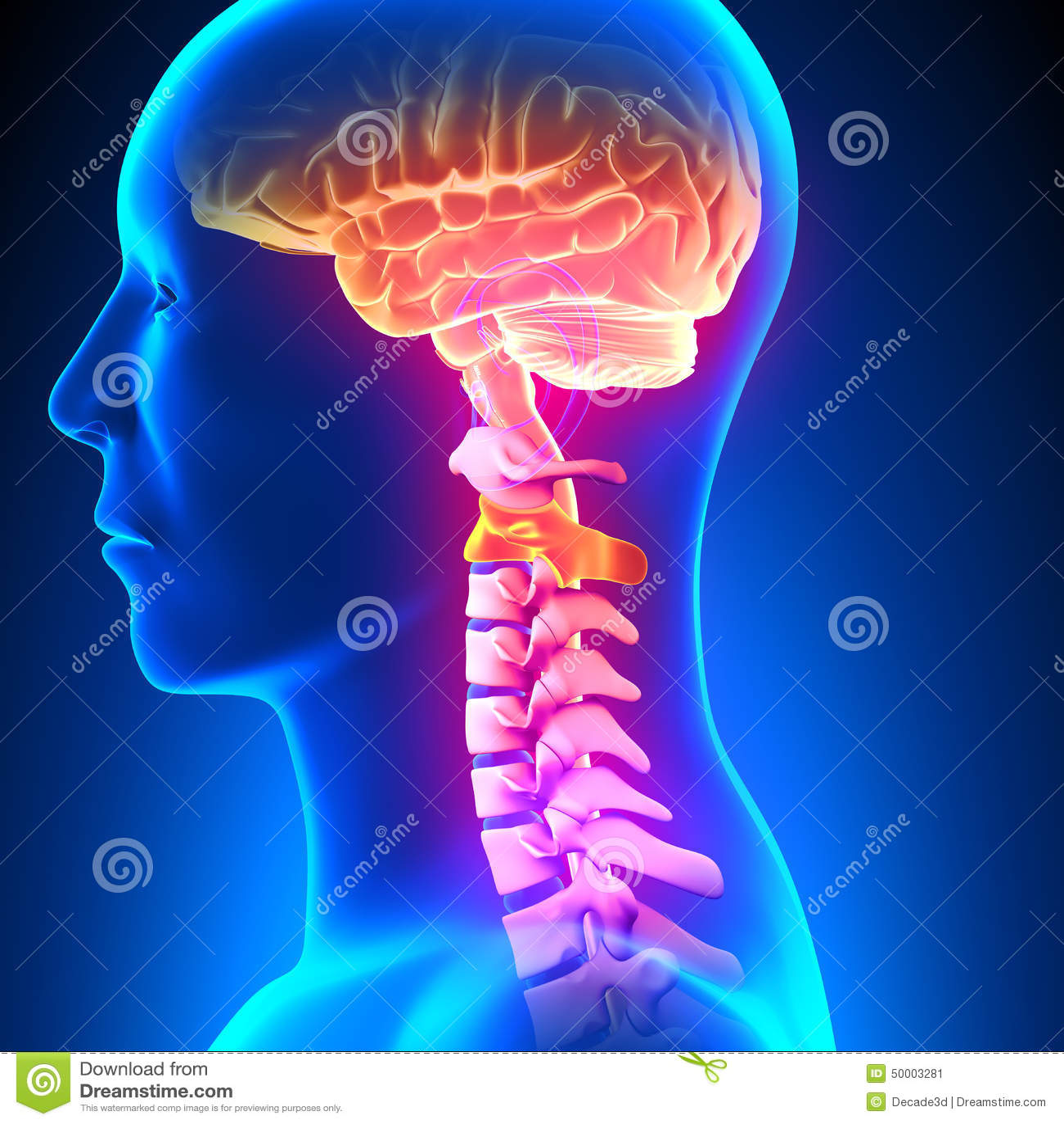C2 Disc - Cervical Spine stock illustration. Illustration of patient ...