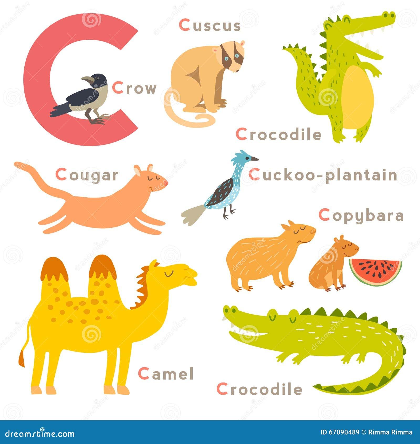 C Letter Animals Set English Alphabet Vector