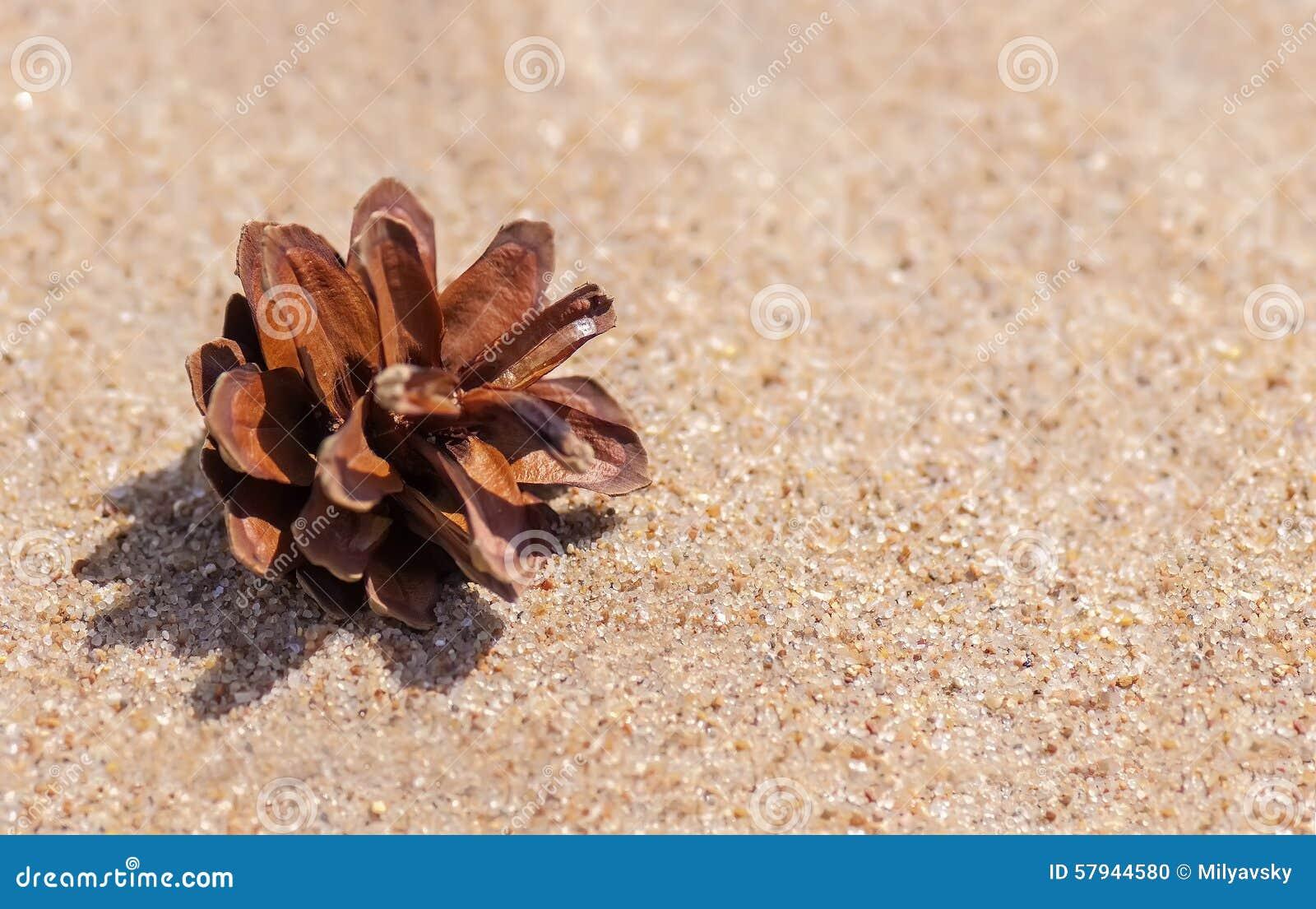 Cône de pin sur un sable