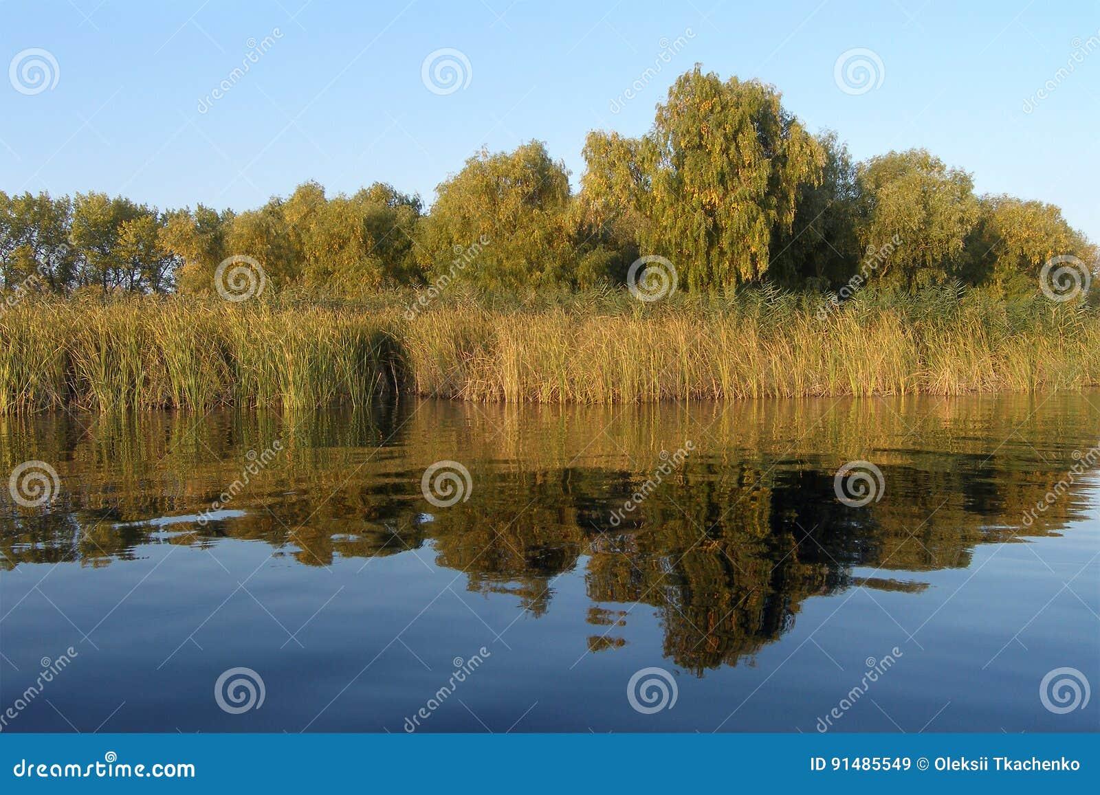 Côté de fleuve avec des arbres