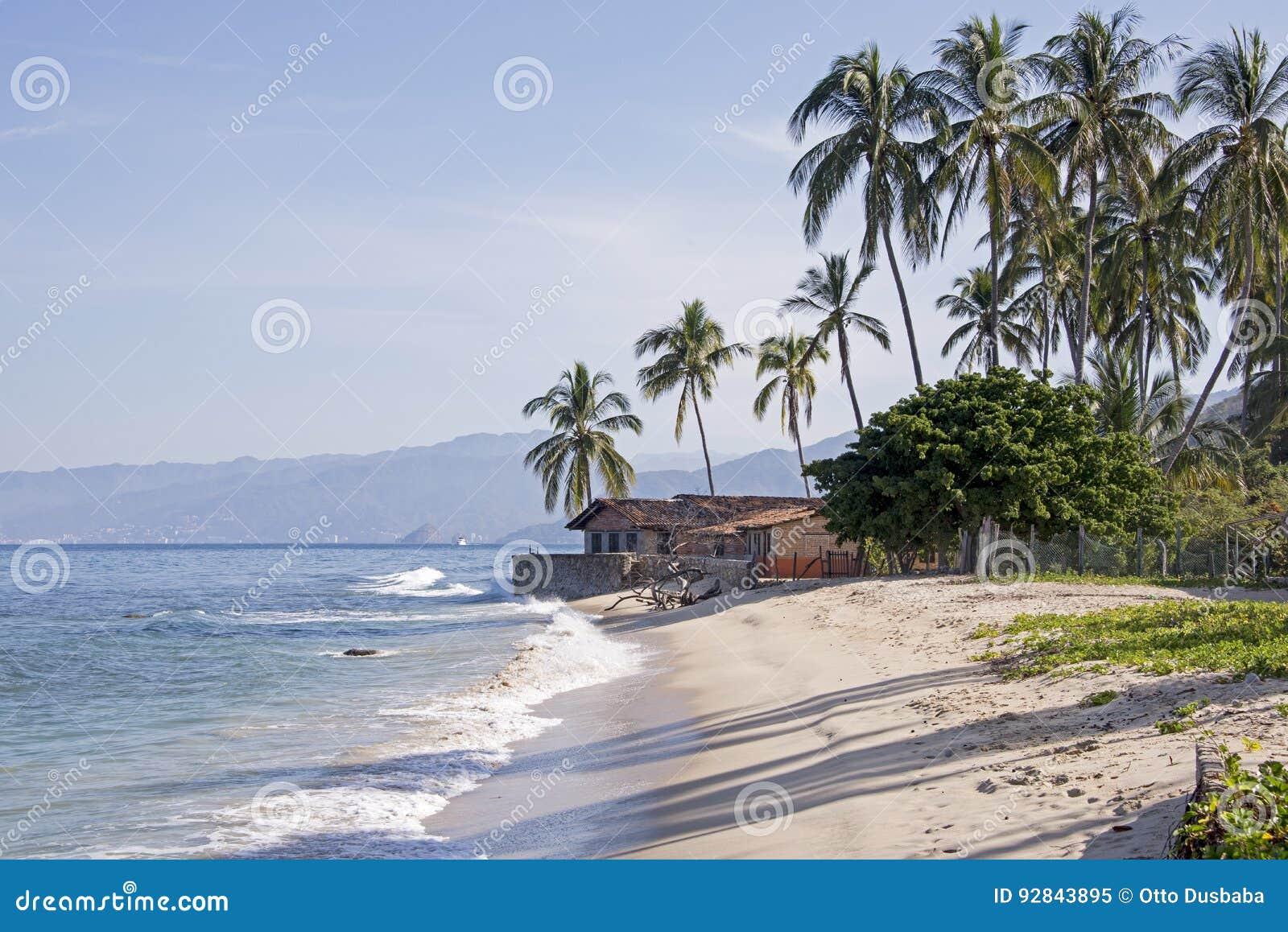 Côte de l océan pacifique avec des palmiers