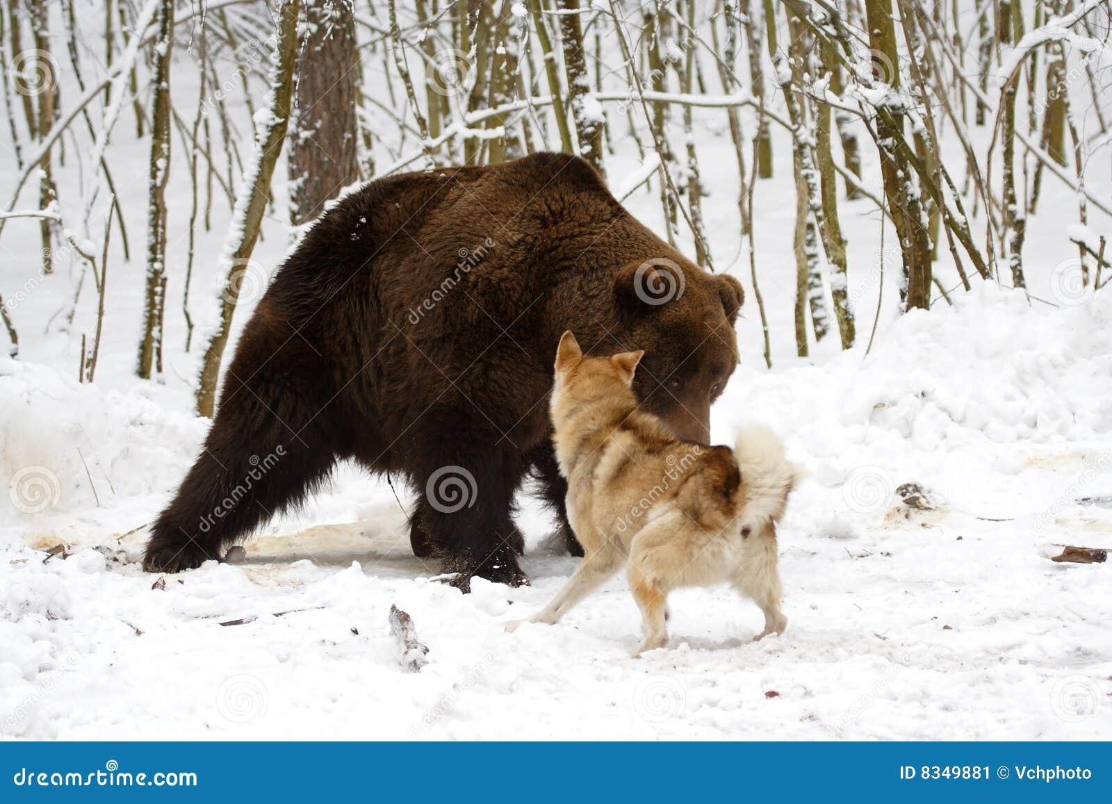 Caça do urso