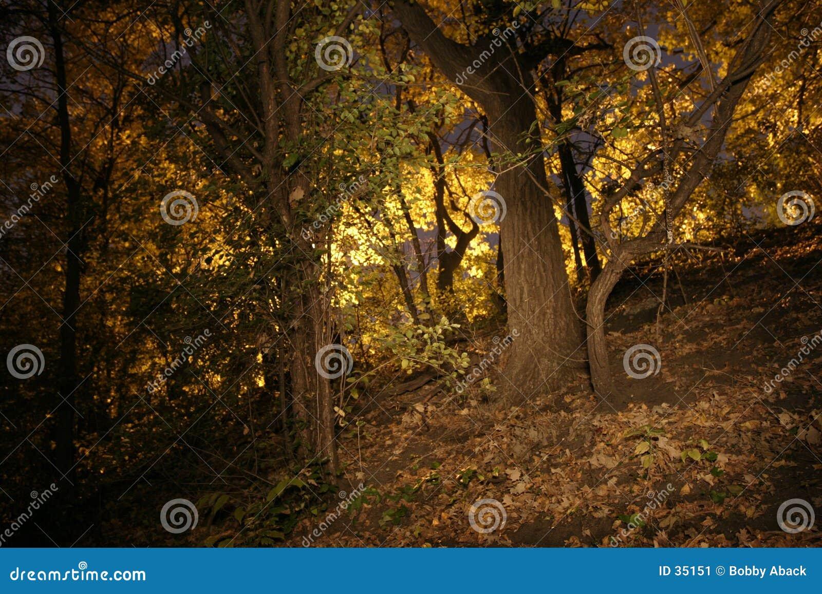 Download Caída imagen de archivo. Imagen de pesadilla, árboles, hoja - 35151