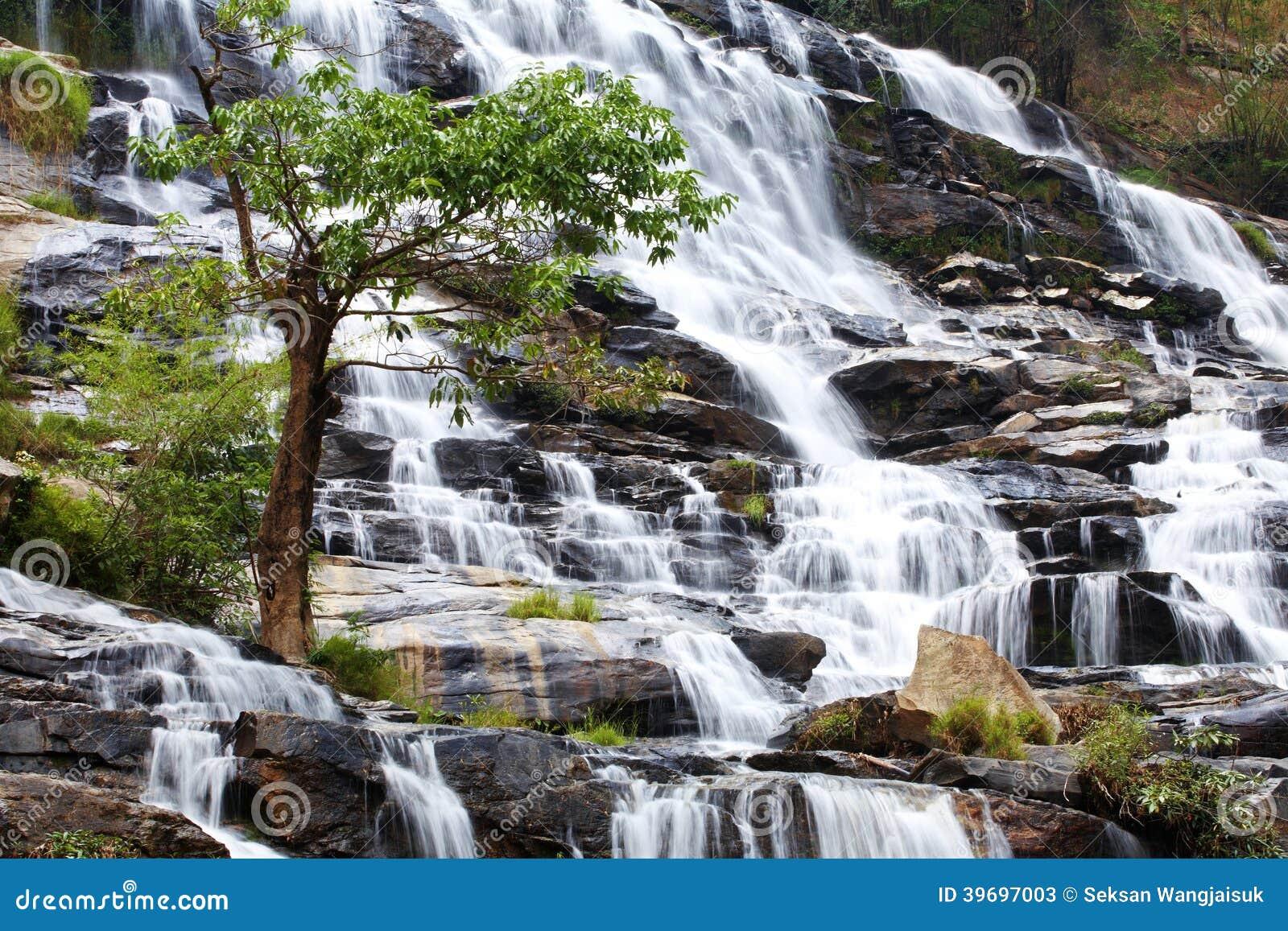 Caída y árbol del agua