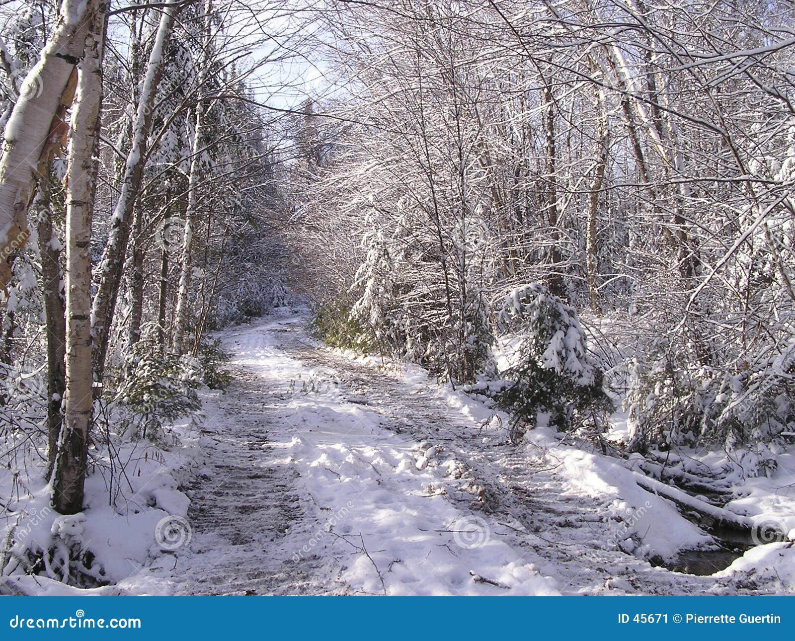 Caídas de la nieve de noviembre