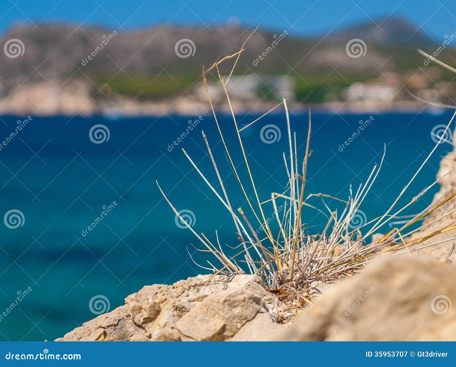 Cañas que crecen en las rocas