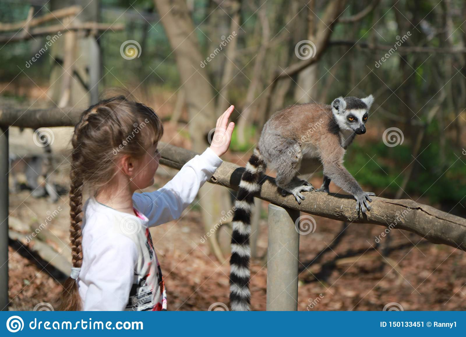 Ca?oe a menina que tem o divertimento com os animais atados anel da foto do selfie dos l?mures exteriores