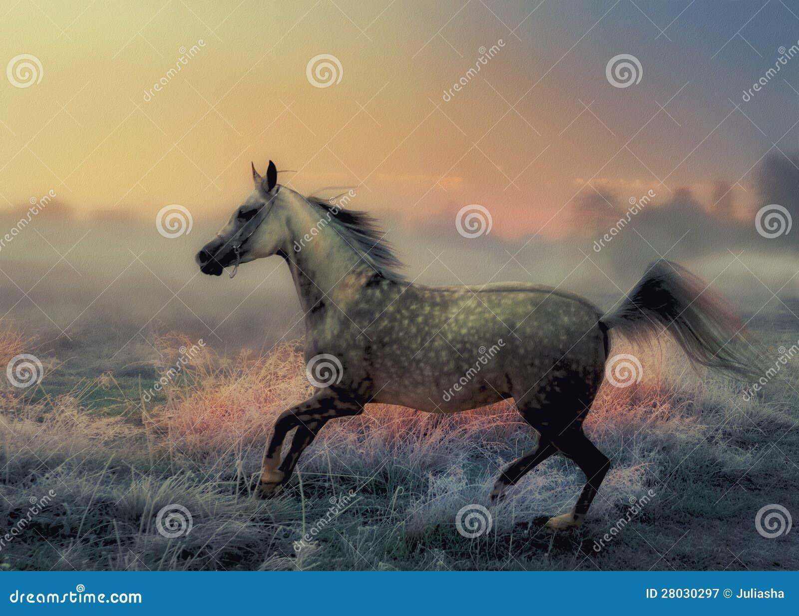 Caballo árabe gris