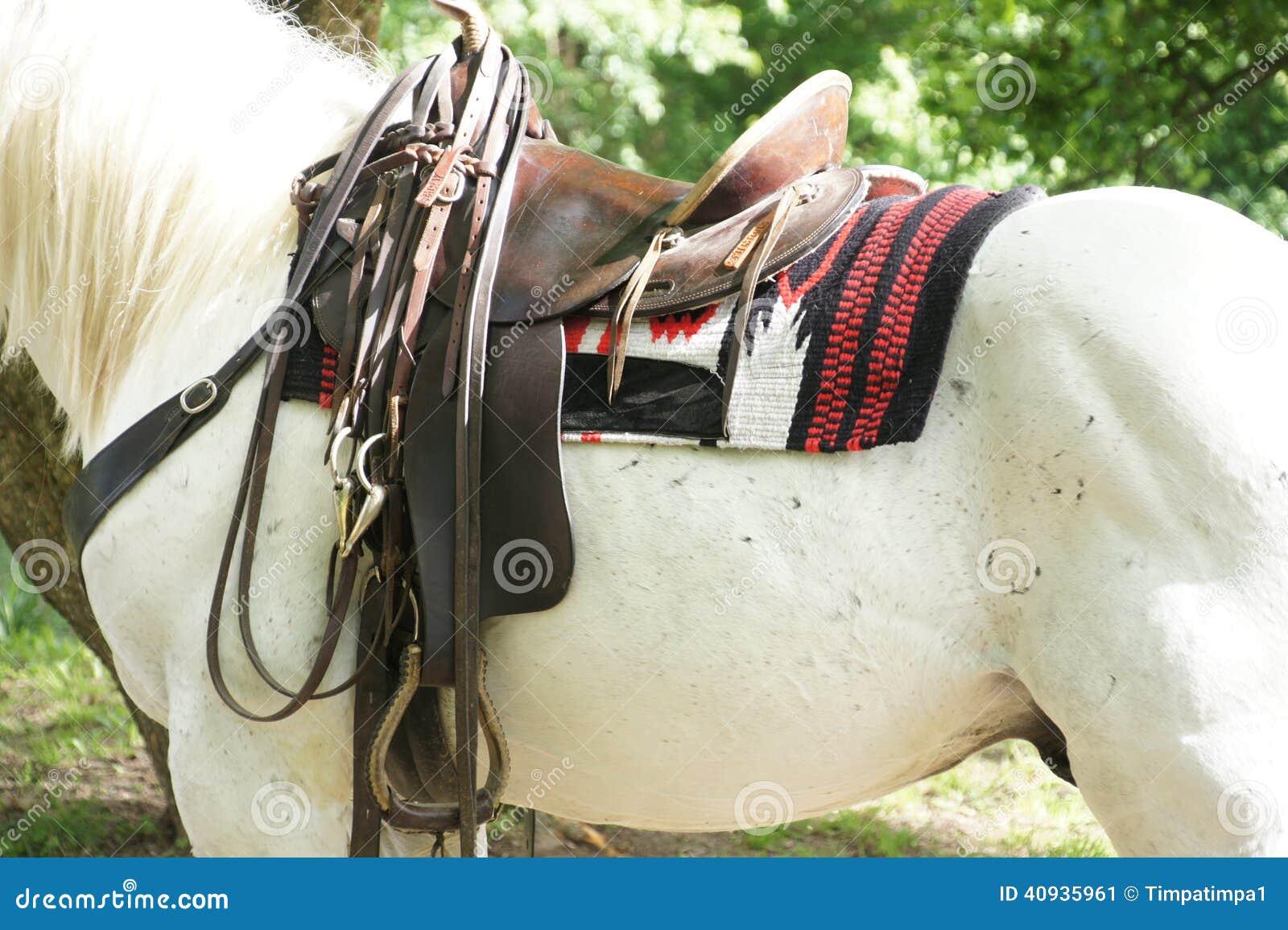 Caballo blanco con la silla de montar foto de archivo imagen 40935961 - Silla montar caballo ...