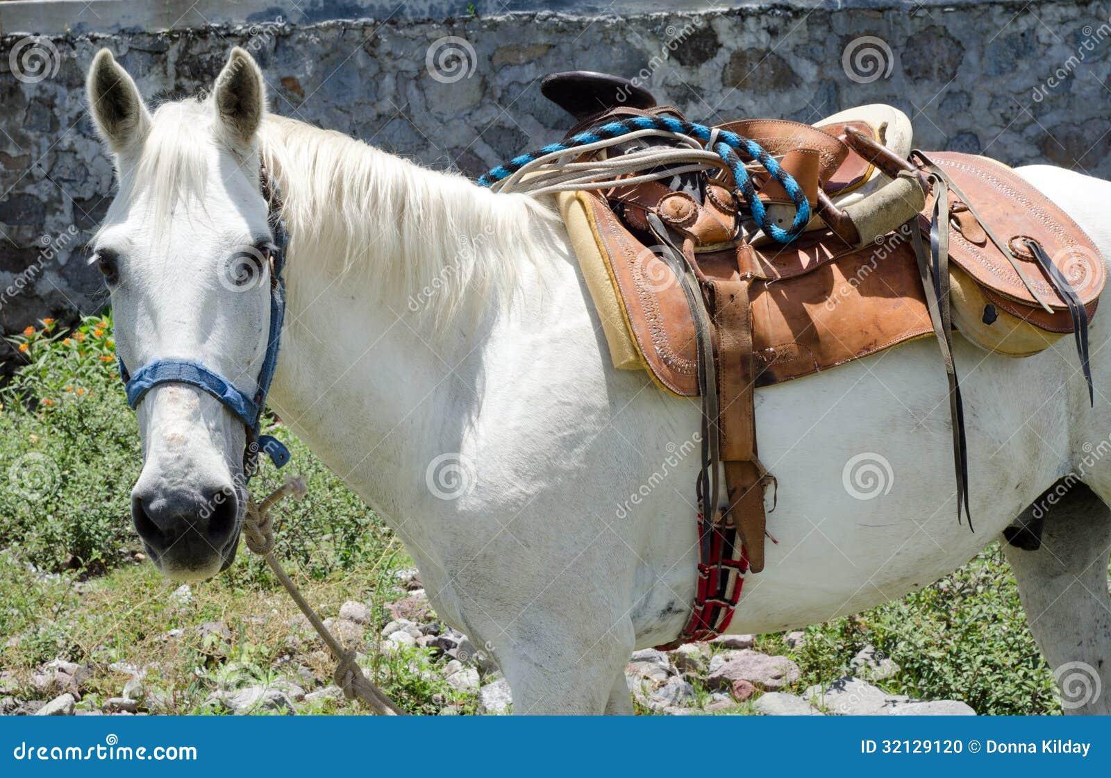 Caballo blanco con la silla de montar mexicana foto de archivo imagen 32129120 - Silla montar caballo ...