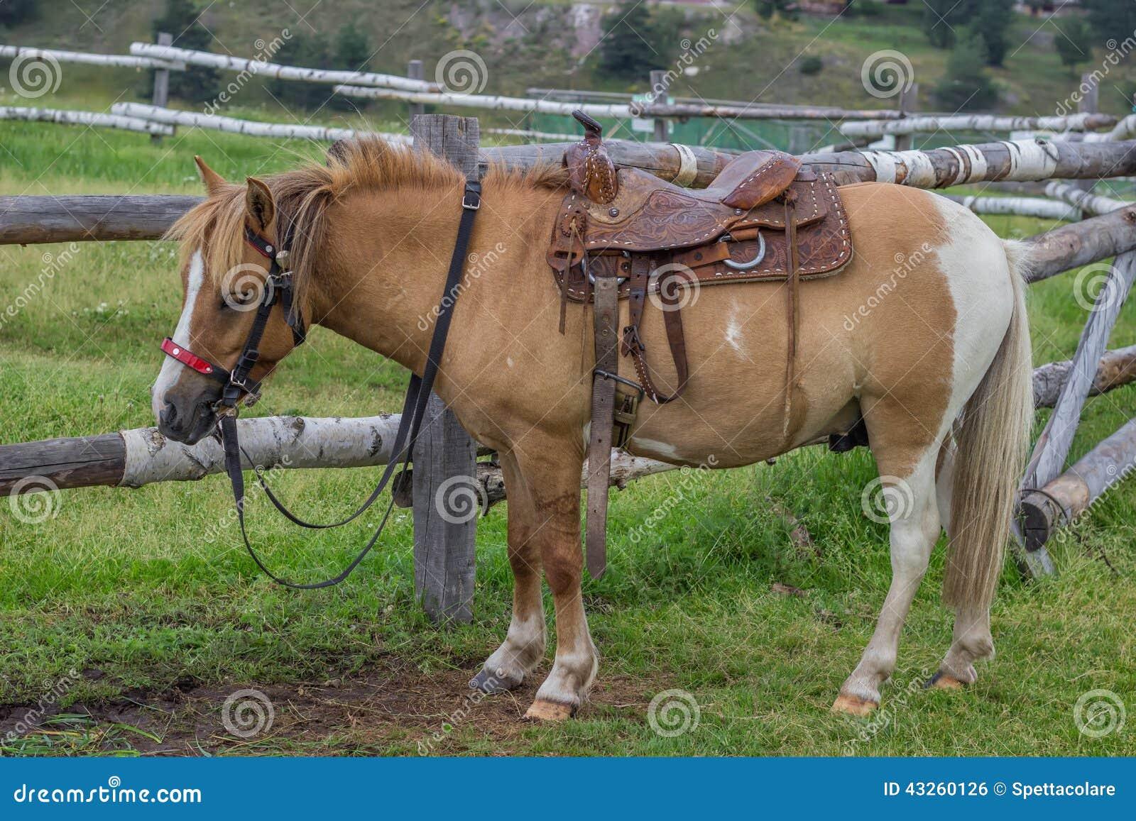 Caballo con la silla de montar hermosa 2 foto de archivo imagen de salto monta as 43260126 - Silla montar caballo ...