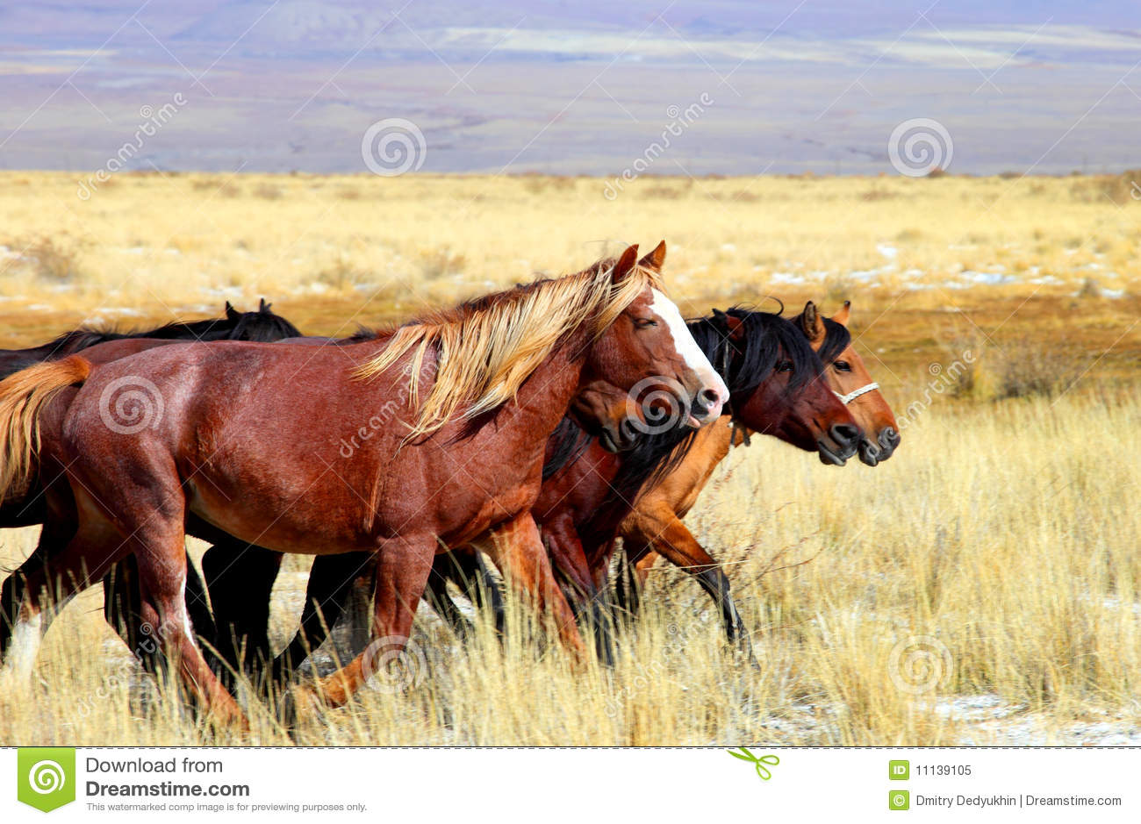 Caballo de Altai