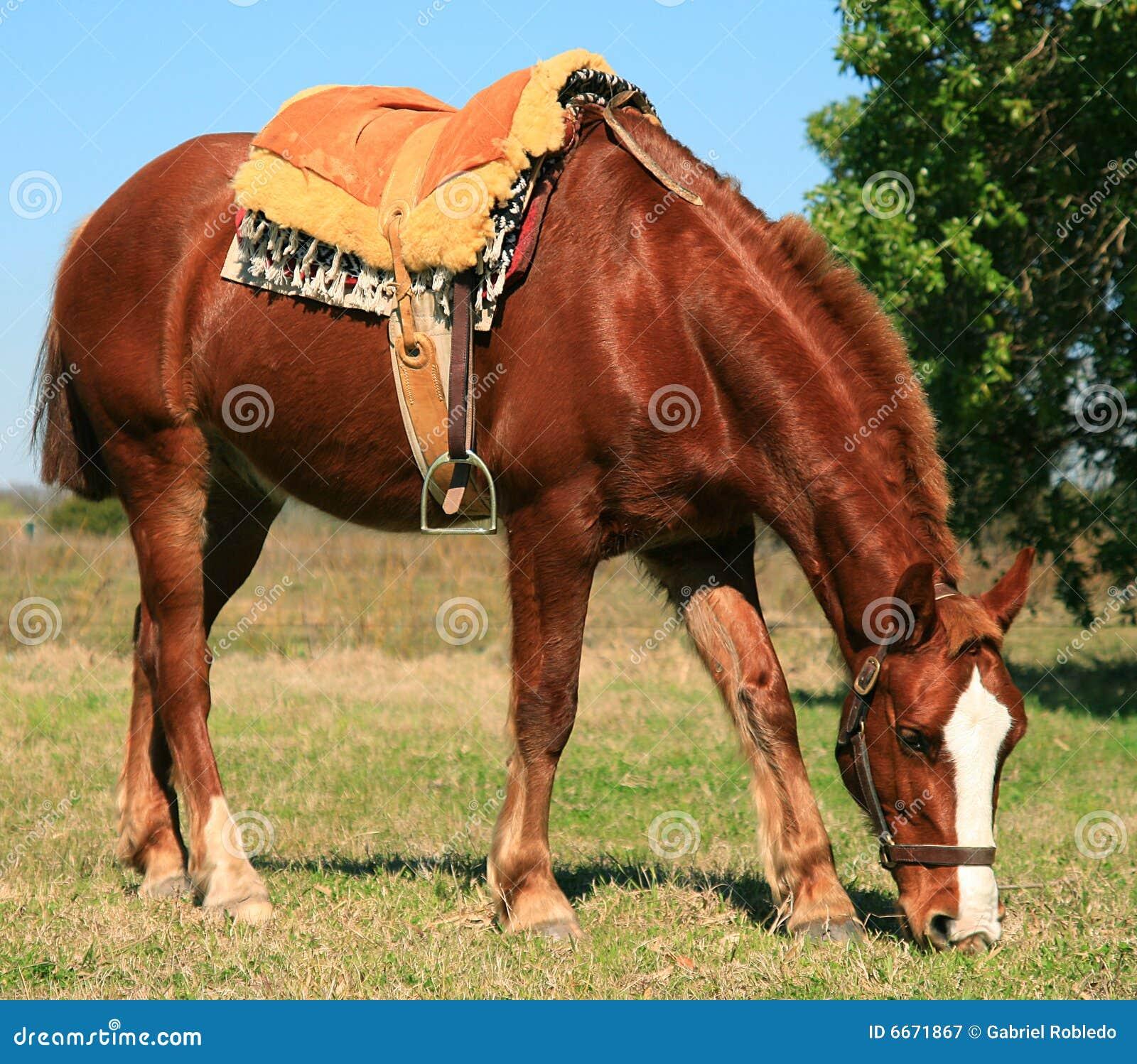 Caballo de montura franc s imagen de archivo imagen de hermoso 6671867 - Caballo silla frances ...