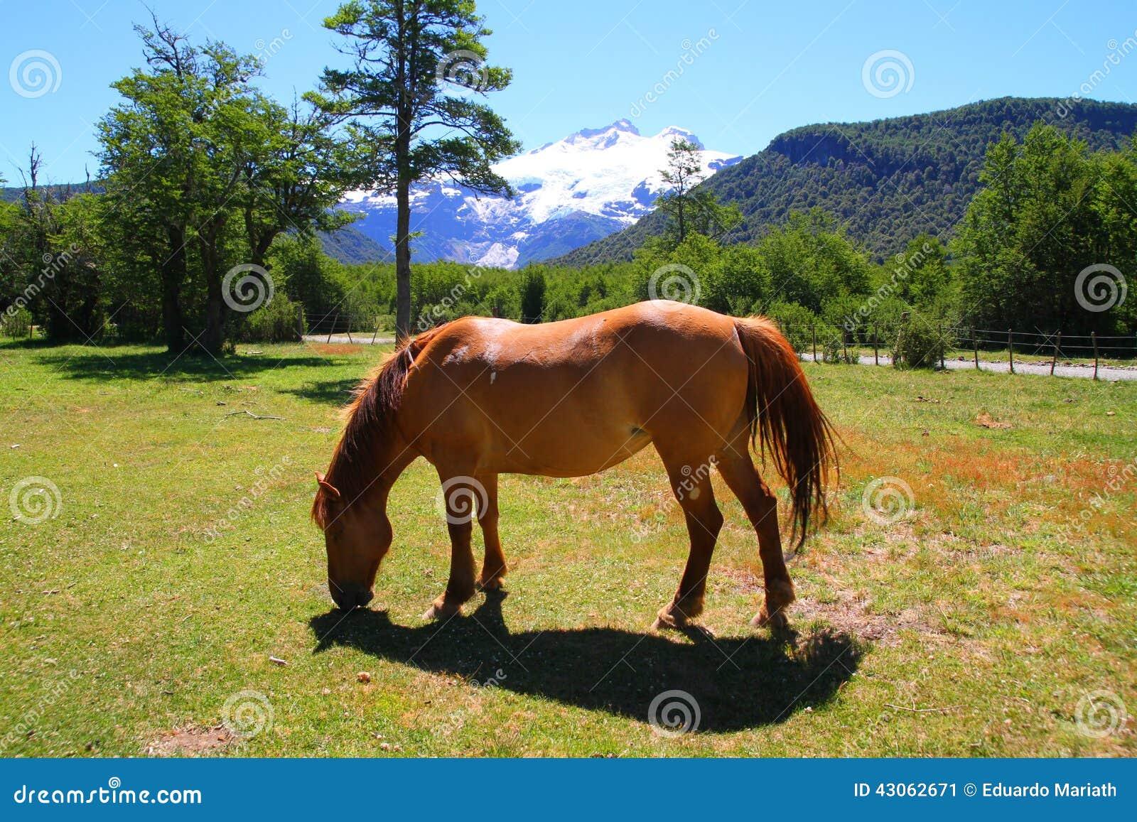 Caballo en el paisaje patagón - Bariloche - la Argentina