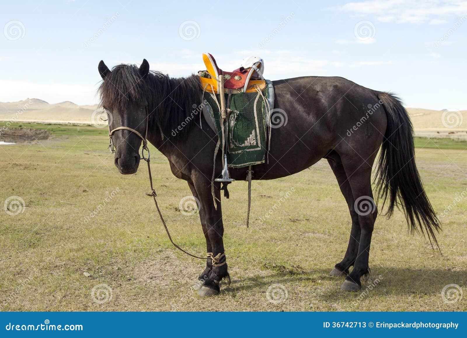 Caballo mongol con la silla de montar fotos de archivo imagen 36742713 - Silla montar caballo ...