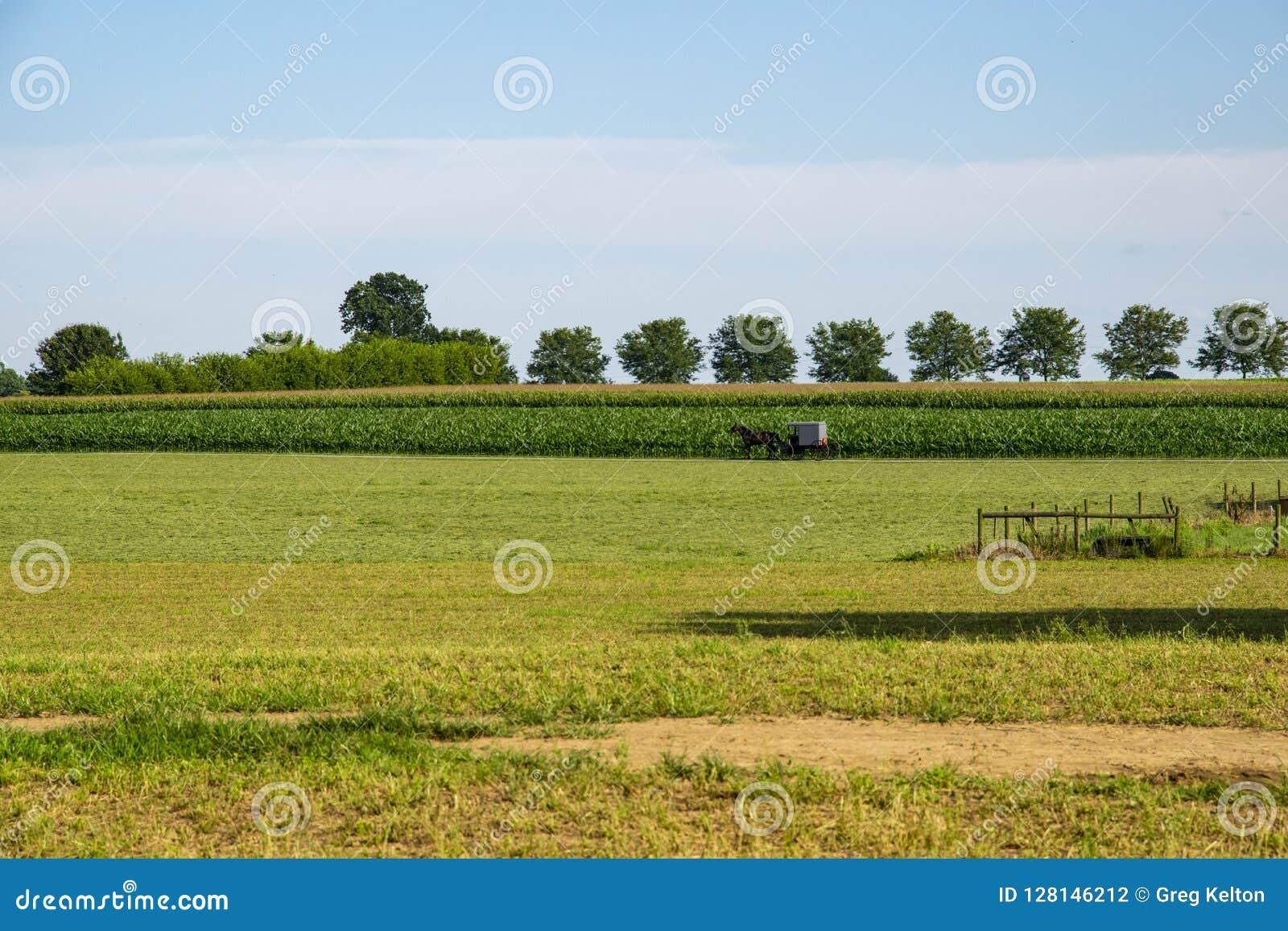 Caballo y cochecillo de Amish que dirigen a casa