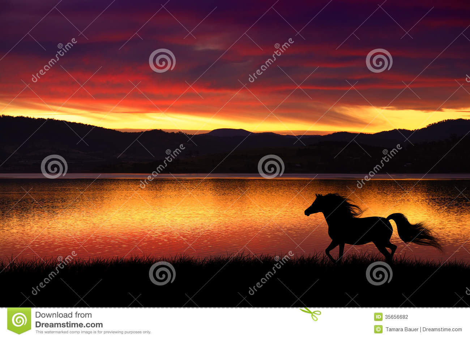 Caballo y puesta del sol