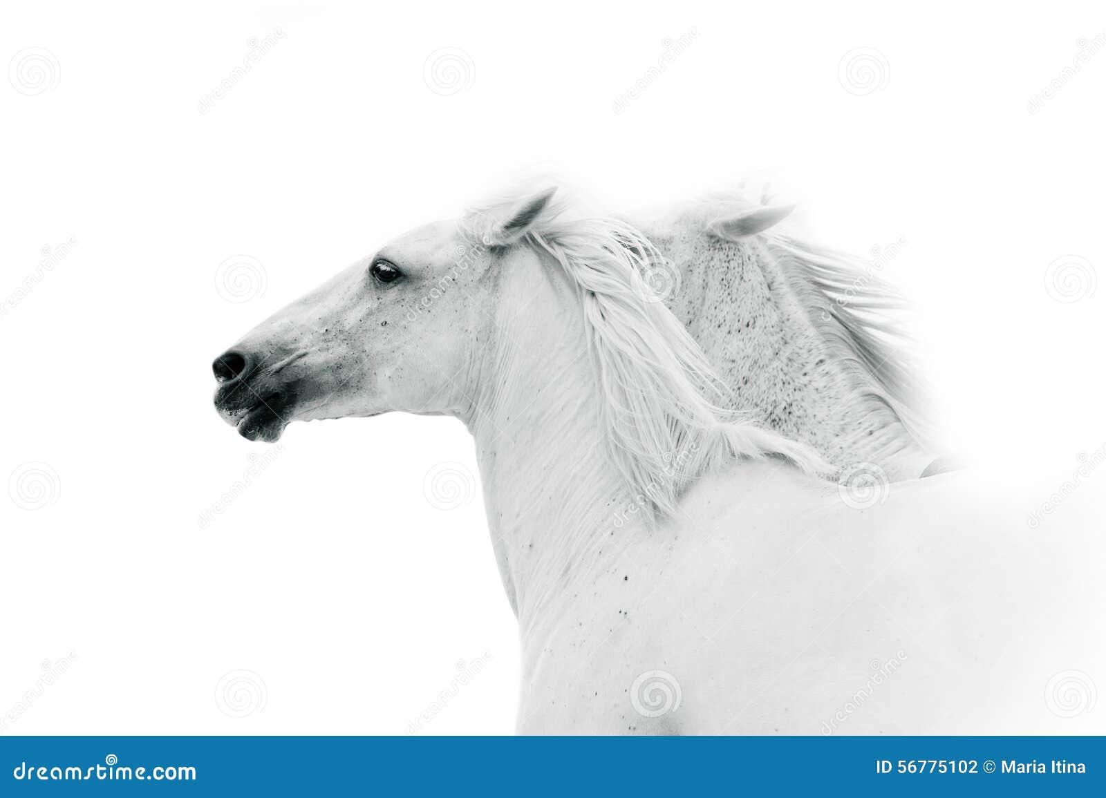 Caballos blancos en colores monocromáticos