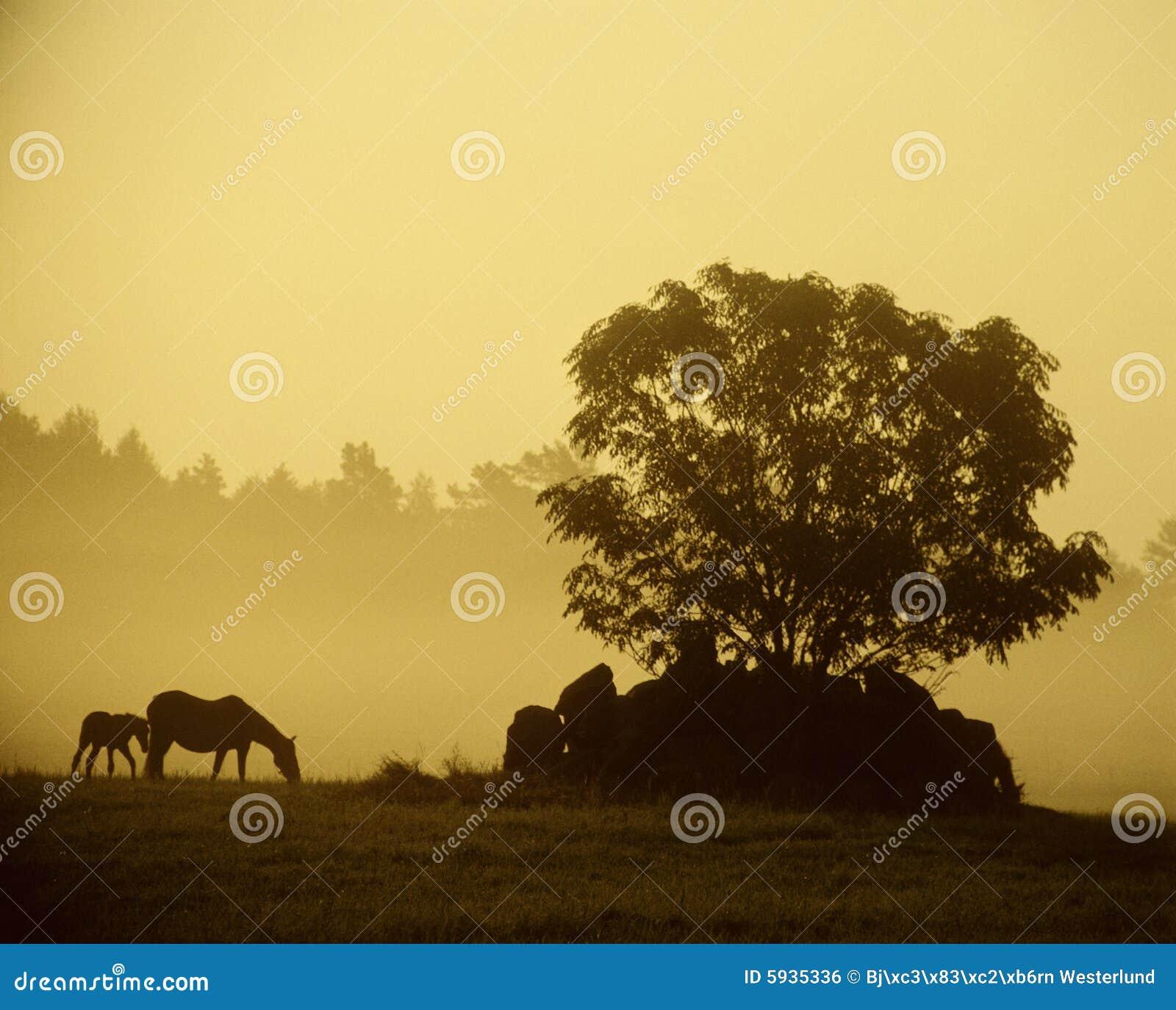 Caballos en el amanecer