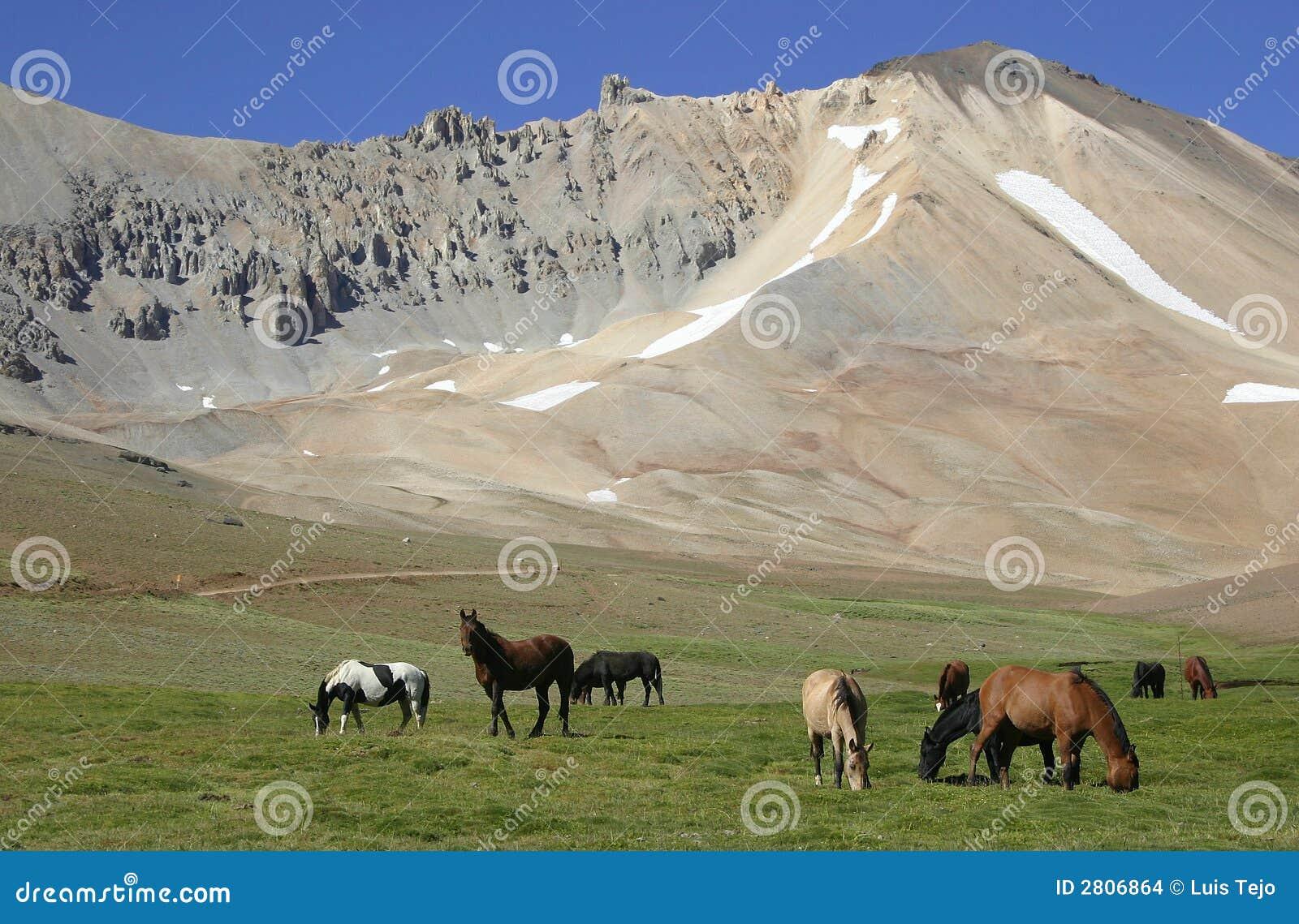 Caballos en el valle