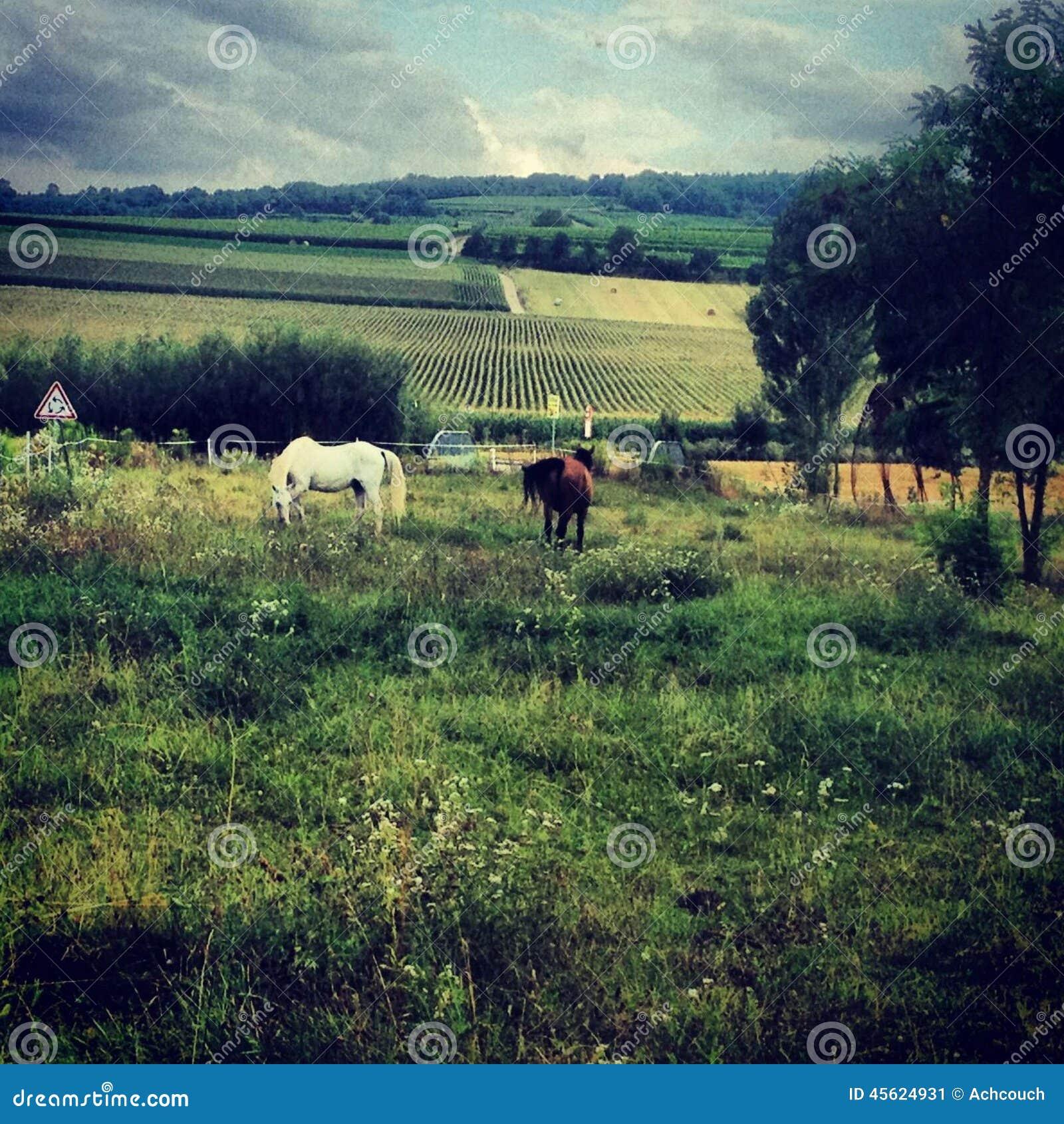 Caballos en la granja