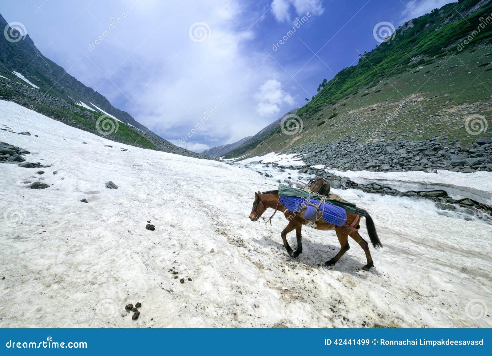 Caballos en las montañas