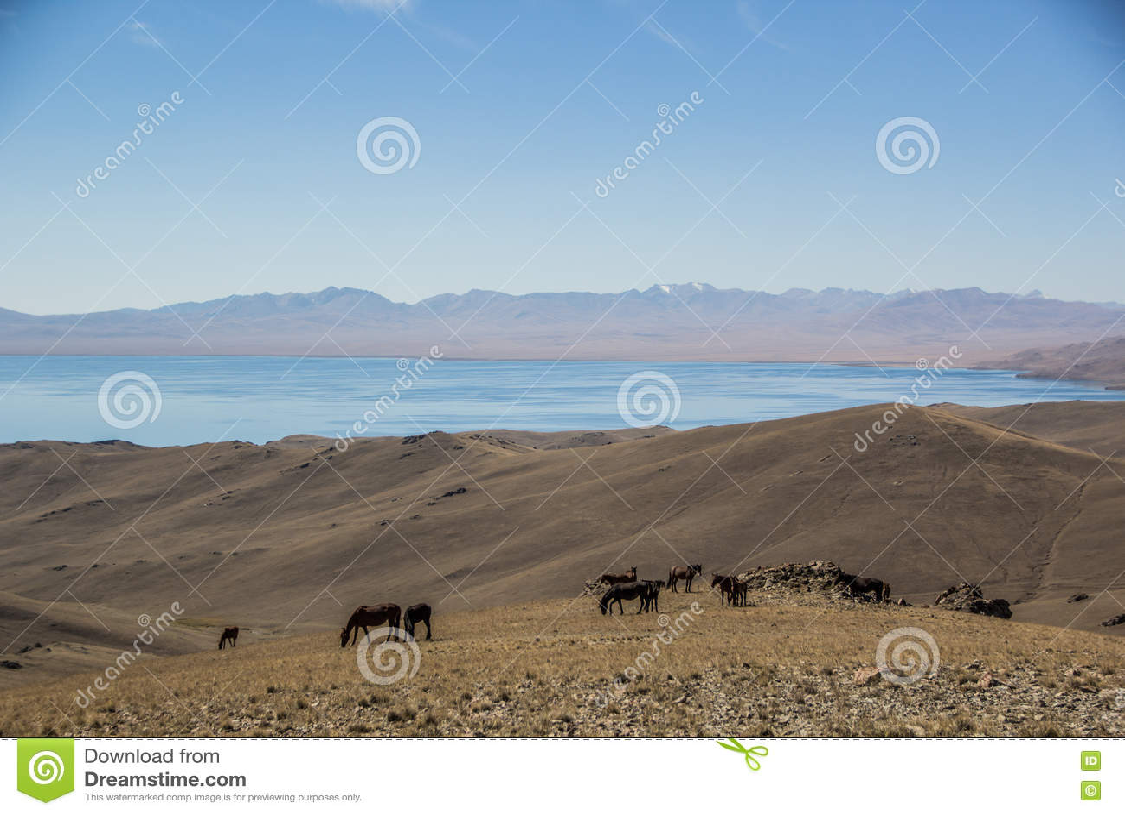 Caballos en las montañas de Kirgiz